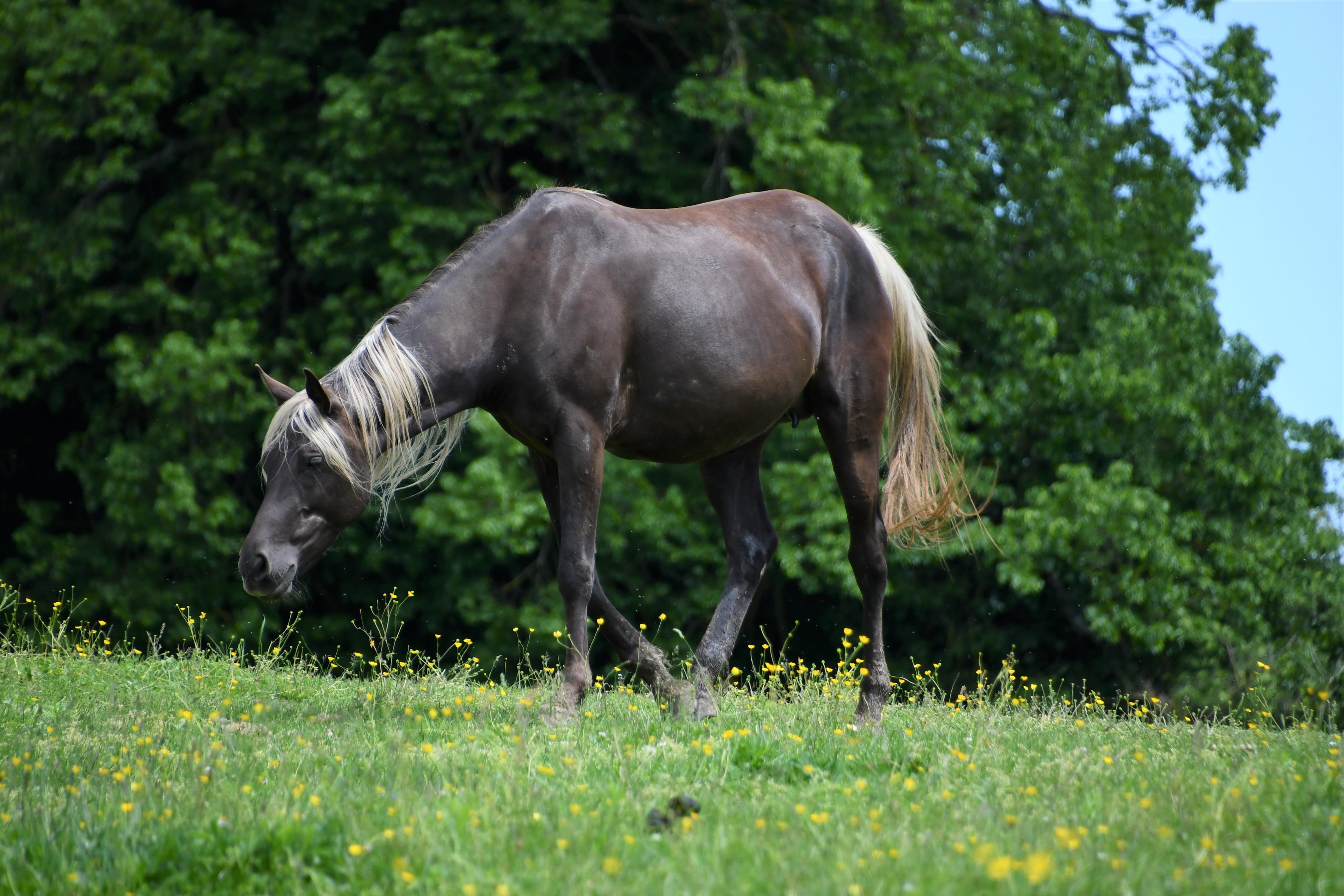 horses-30.05-3