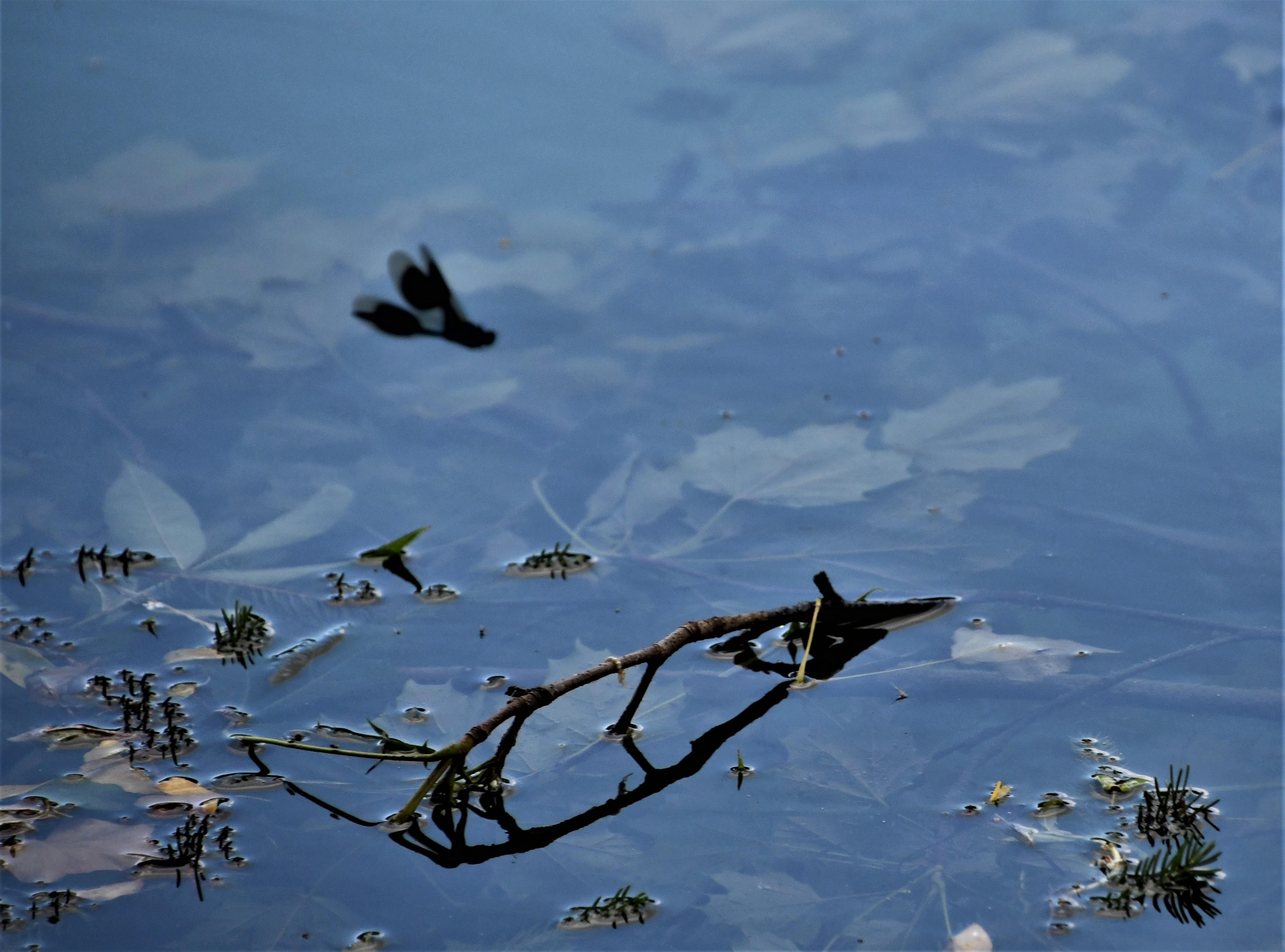 dragon-flies-20.06-1-1