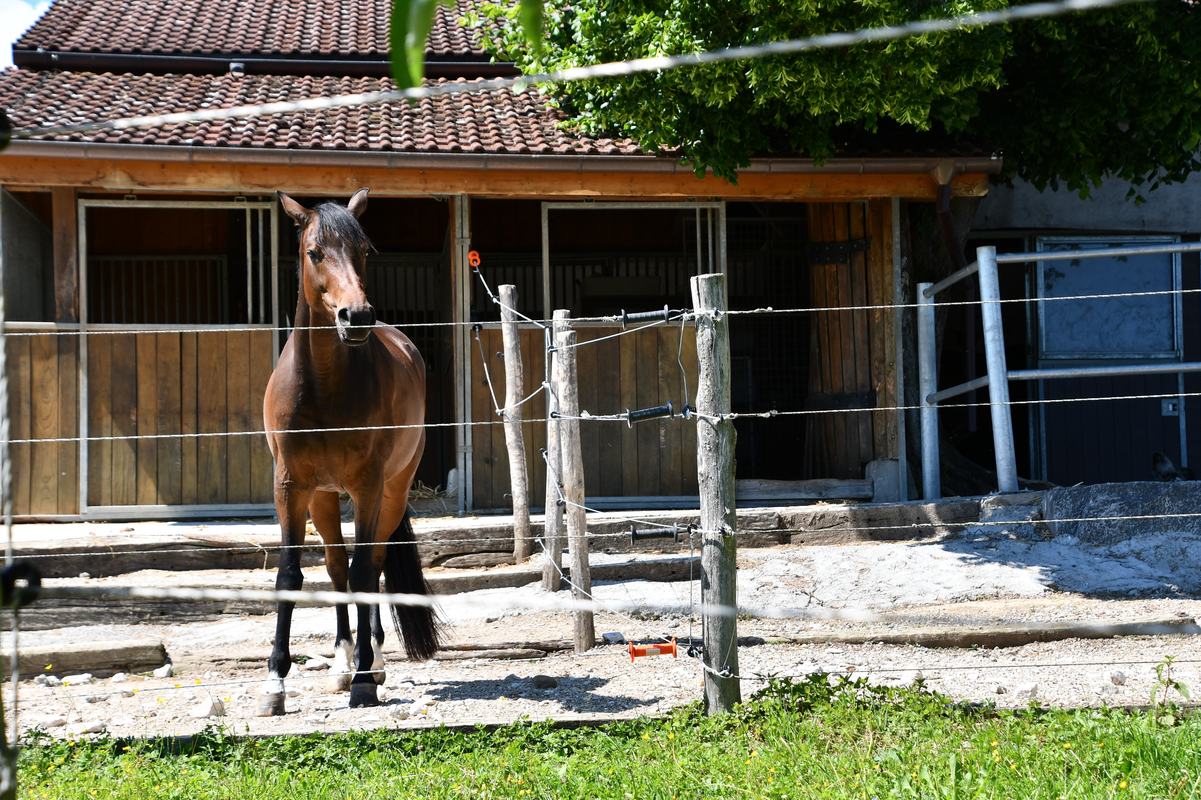 horses-02.06-5