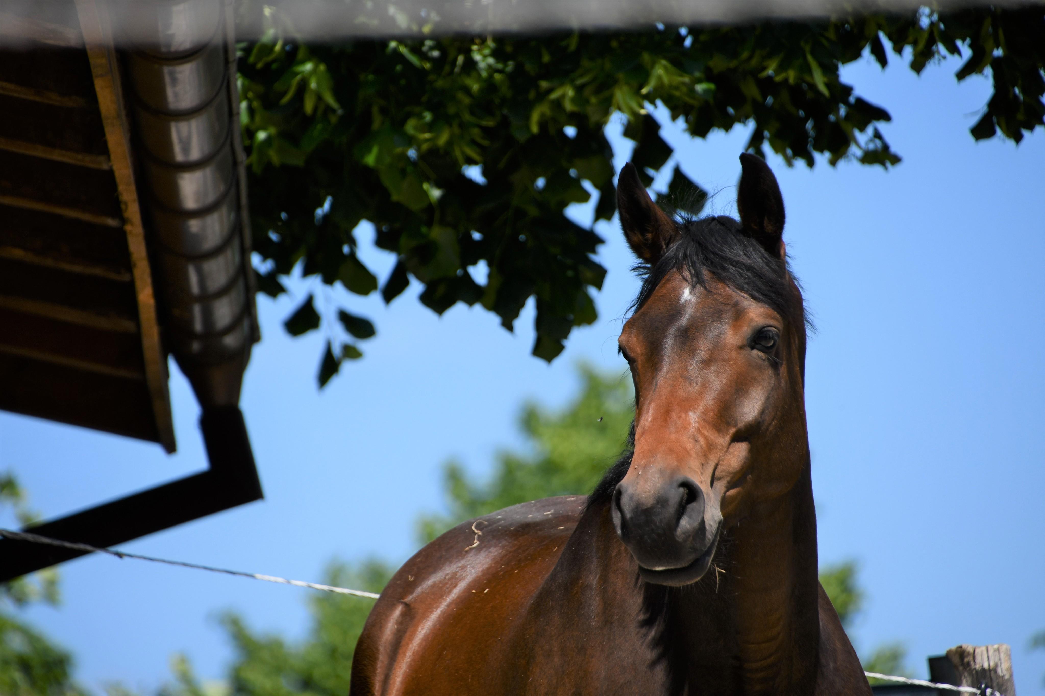 horses-02.06-7