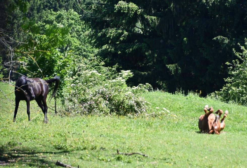 horses-13.06-3