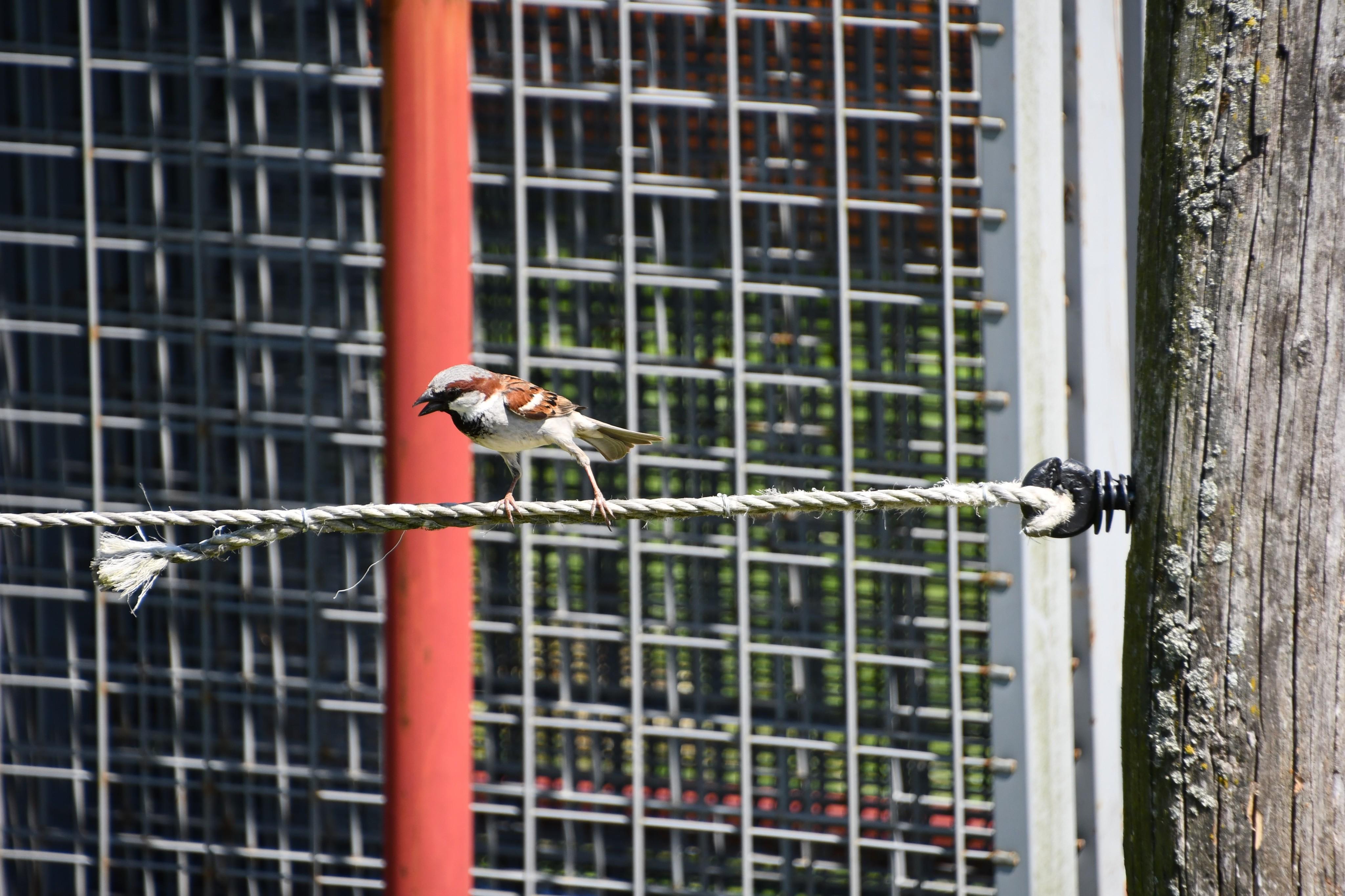 sparrow-02.06-2