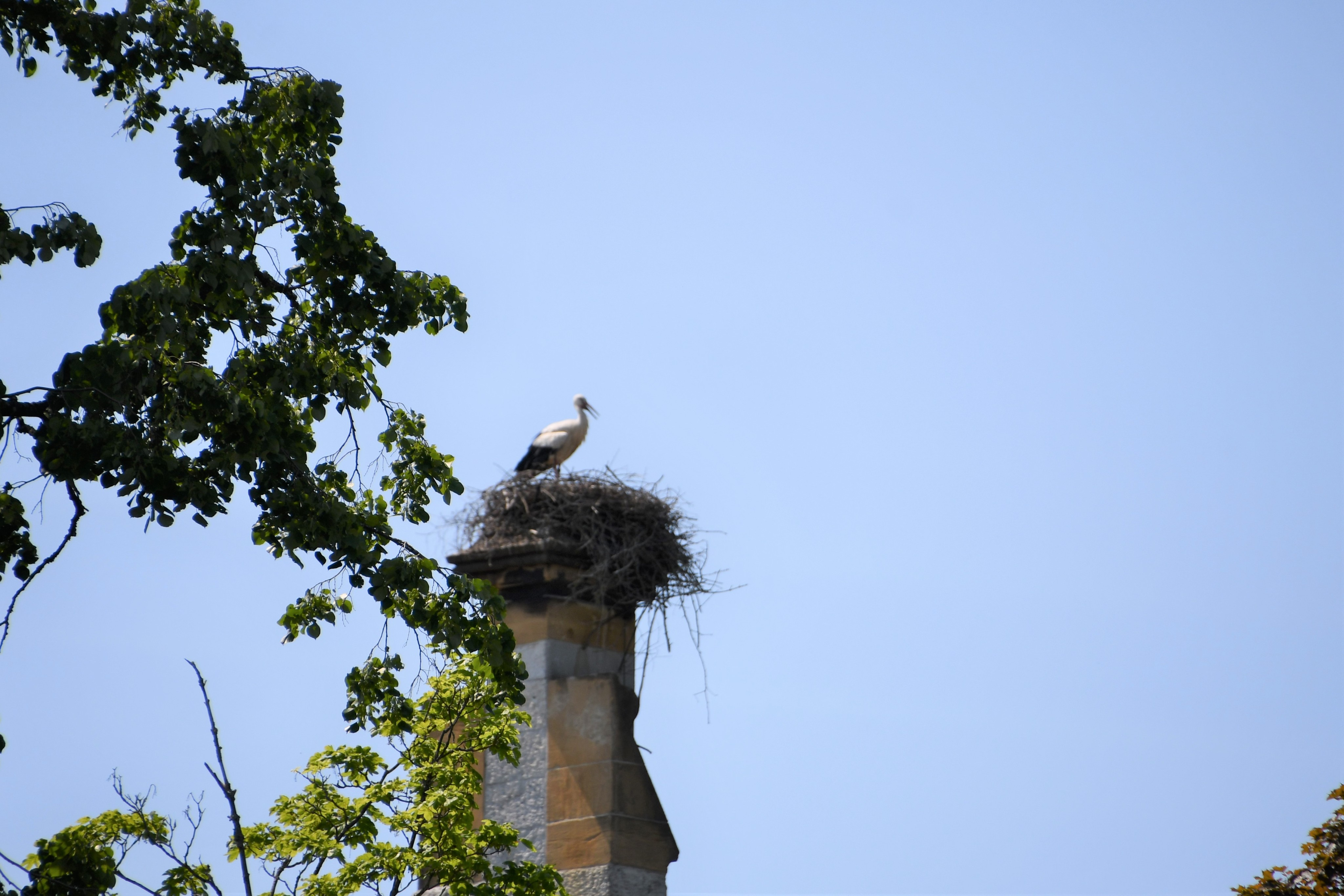 stork-04.06-2