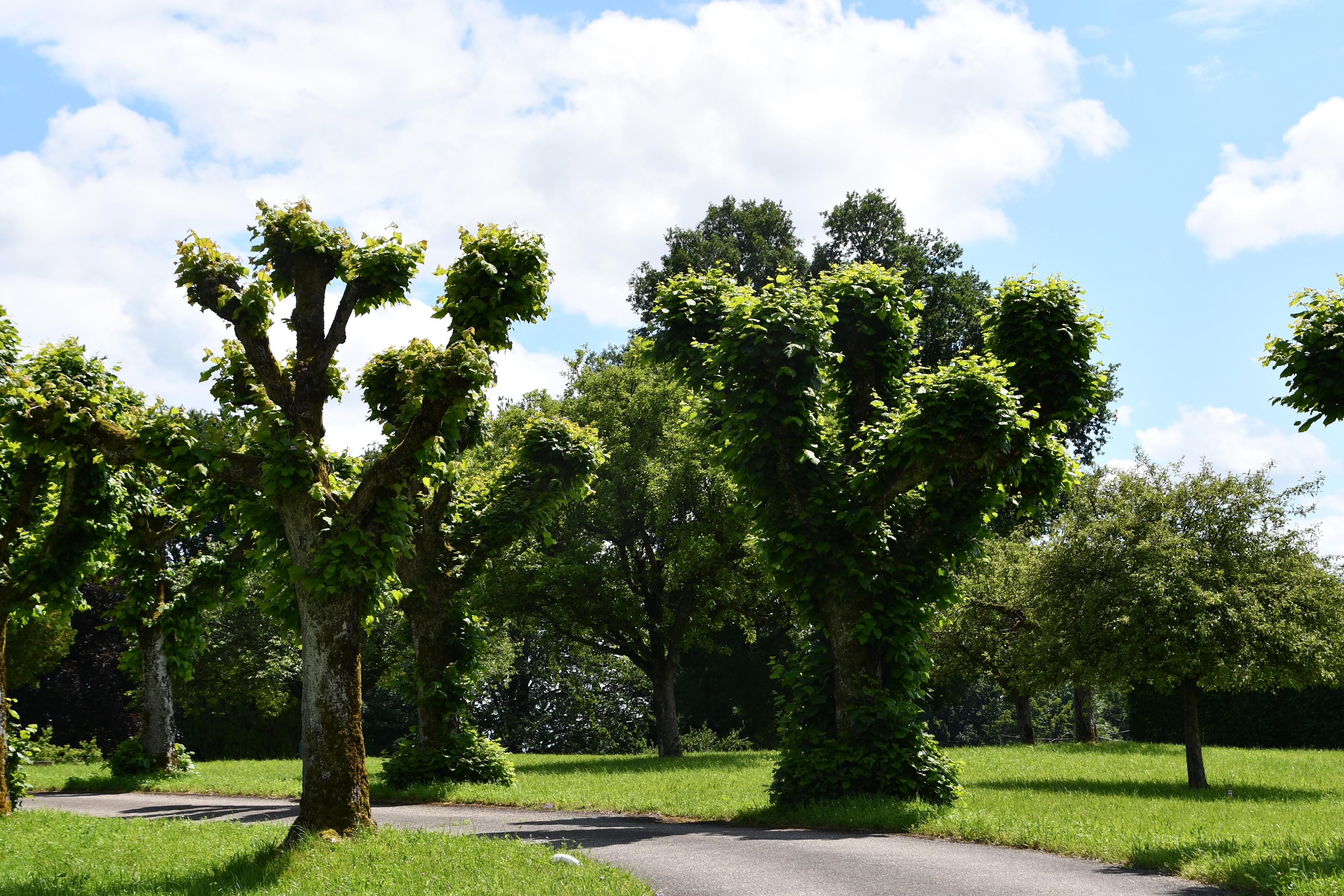 trees-20.06.2019