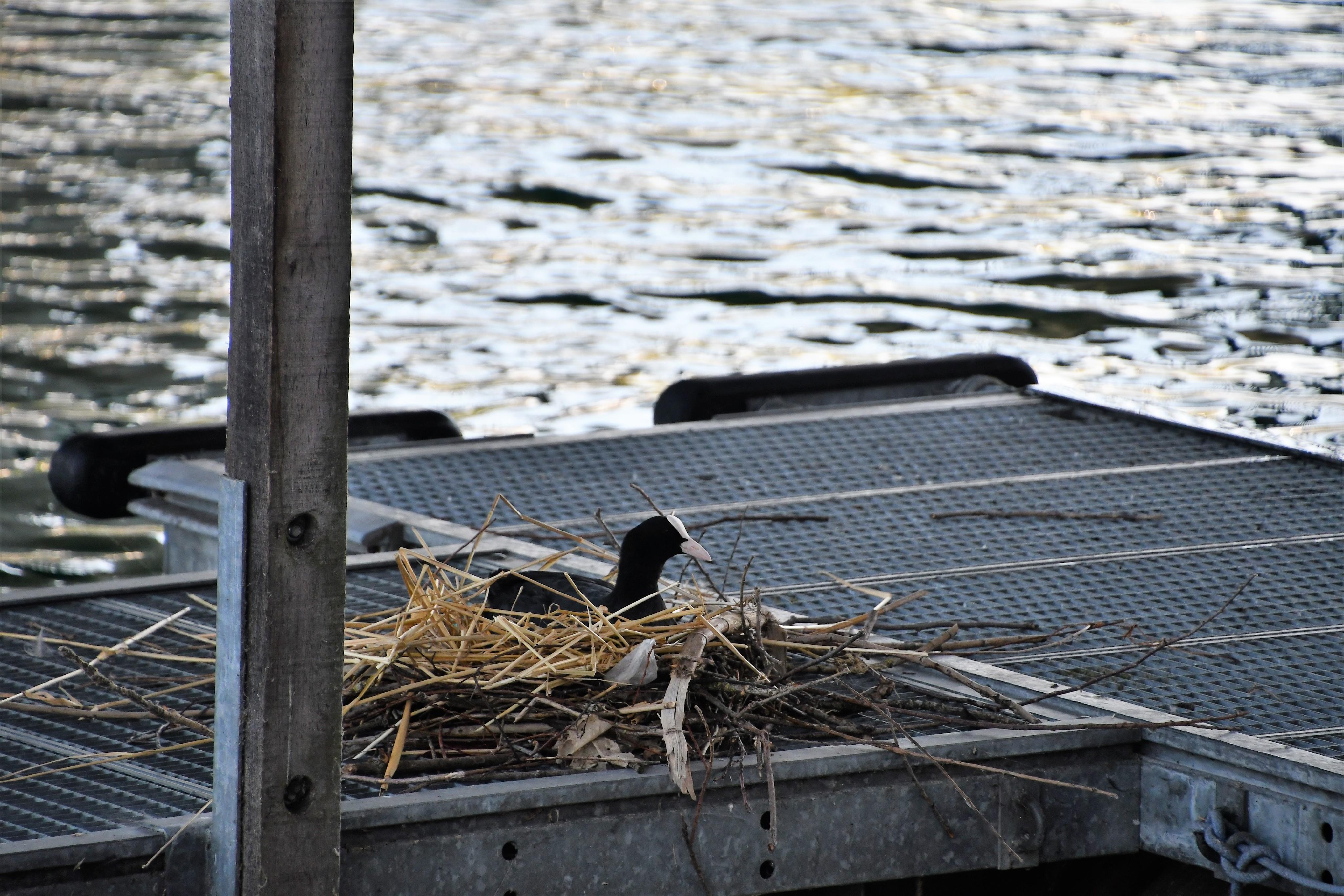 duck-nest-23.07.2019-1
