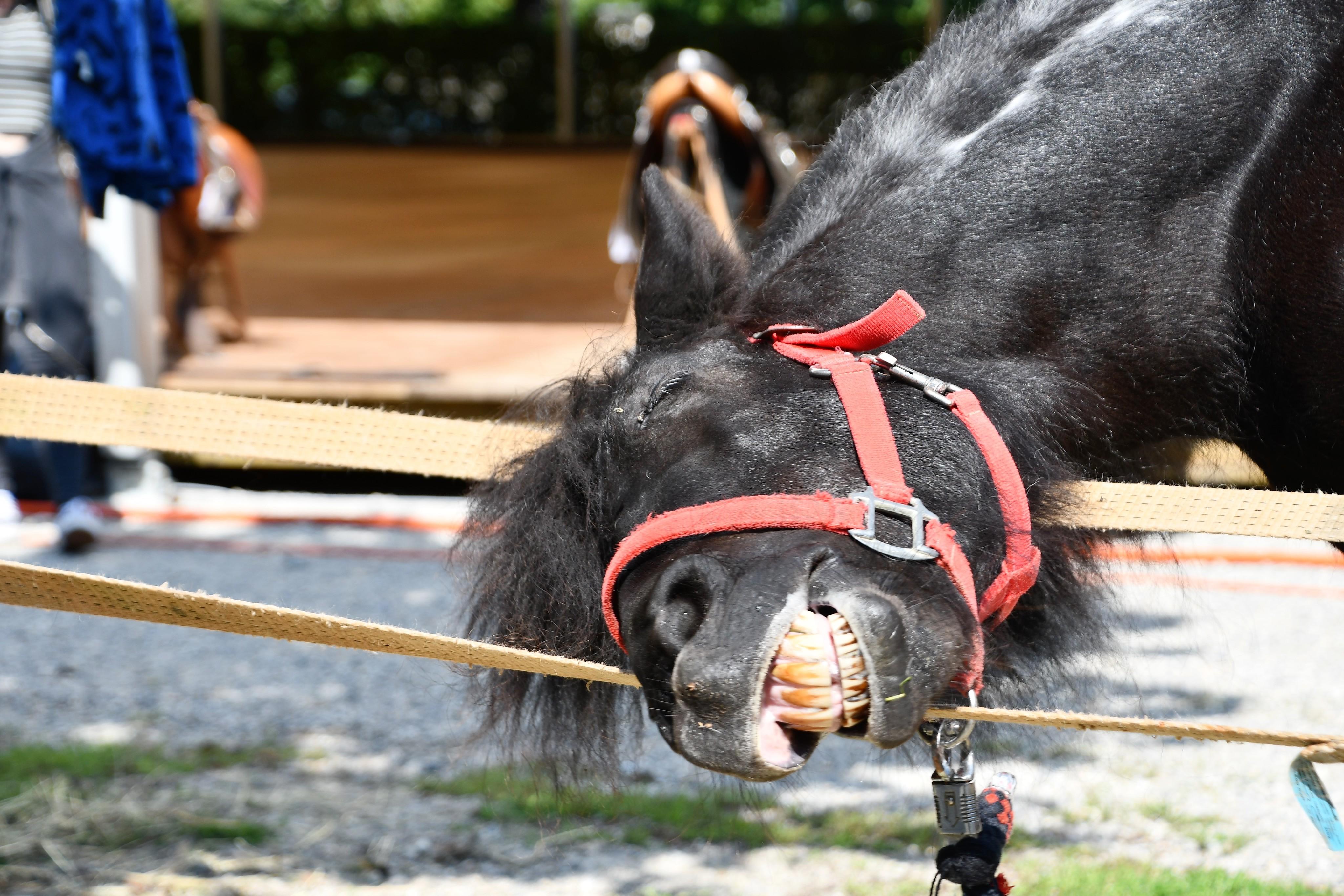 donkeys-24.08-2