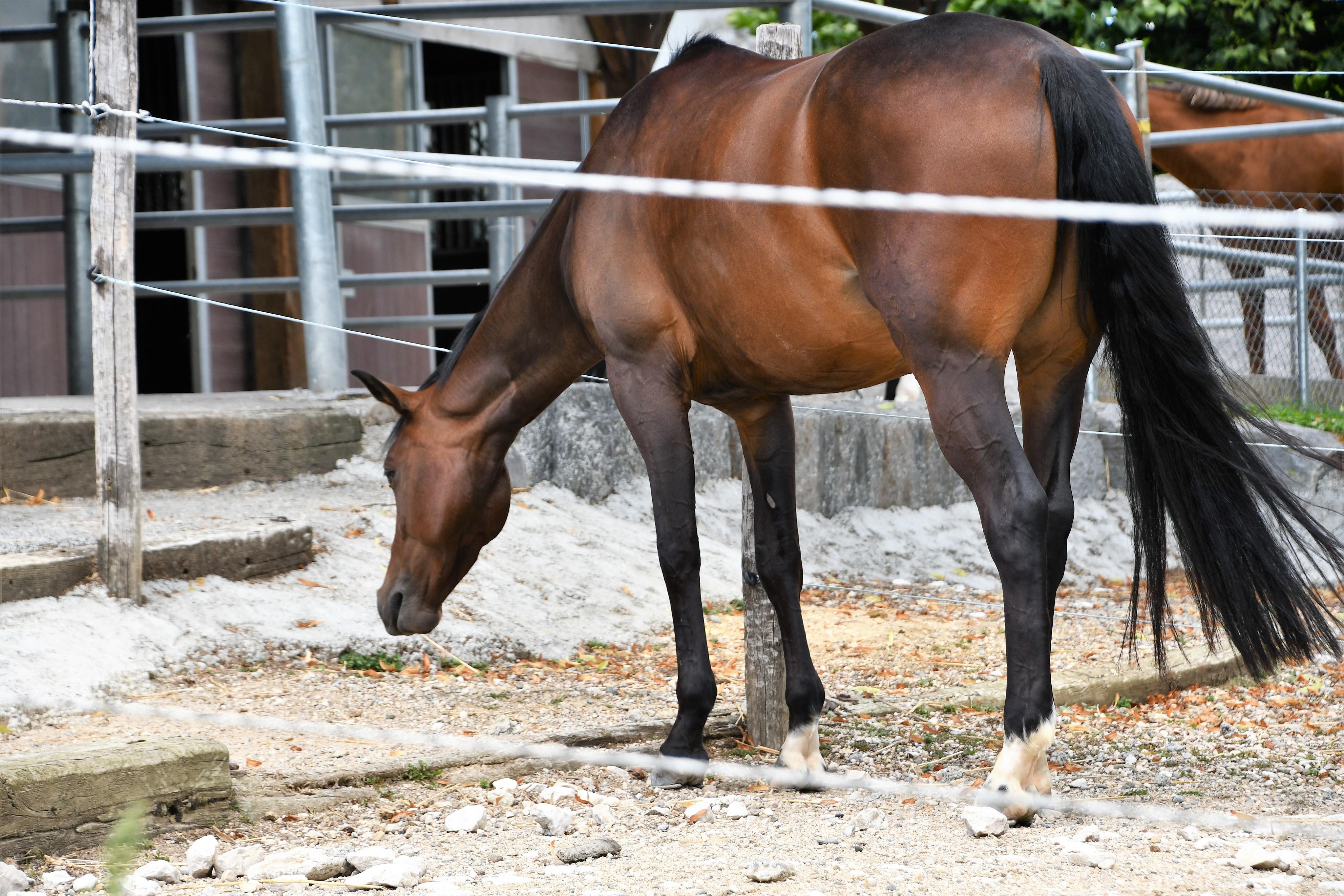 horse-15.08-2