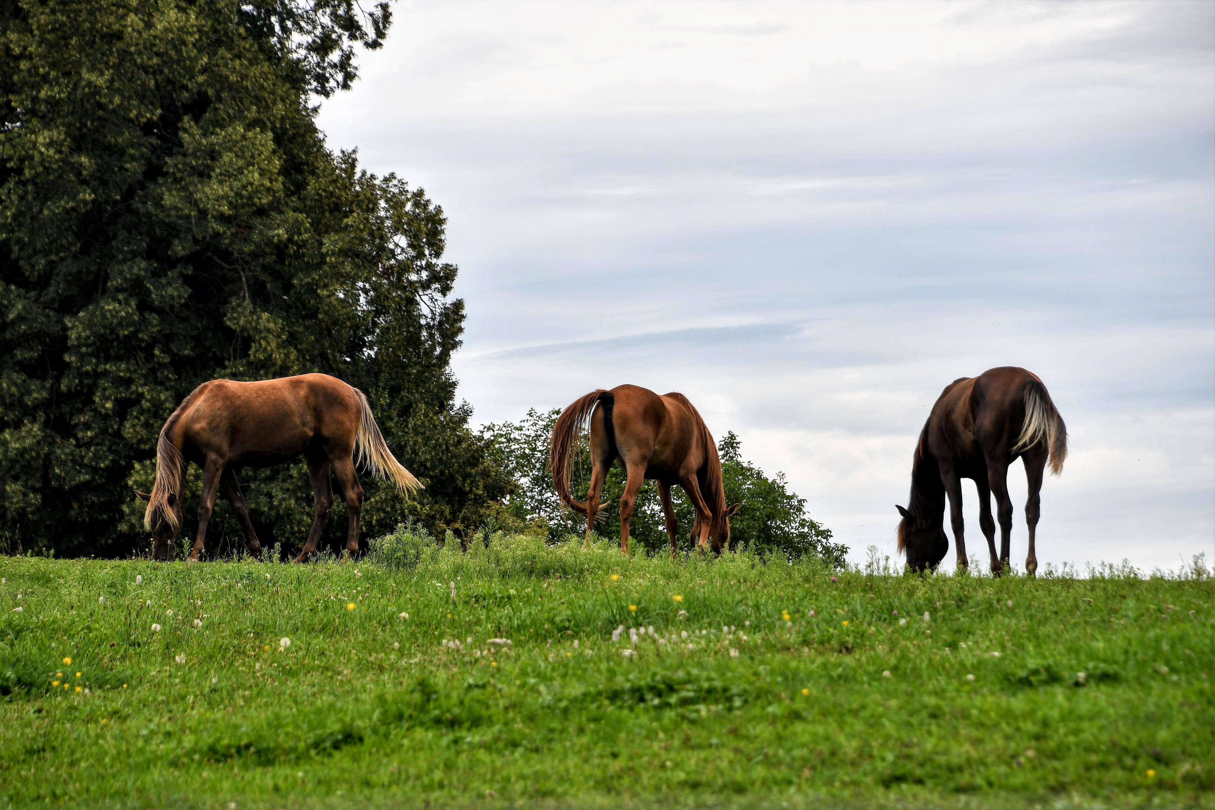 horse-17.08-1