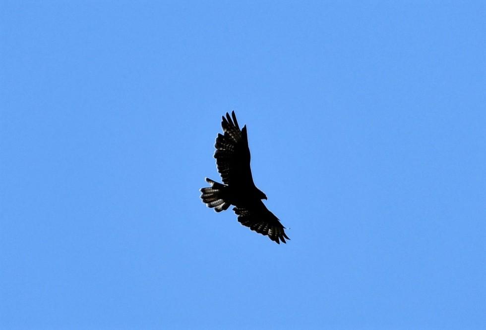 kite-25.08-2