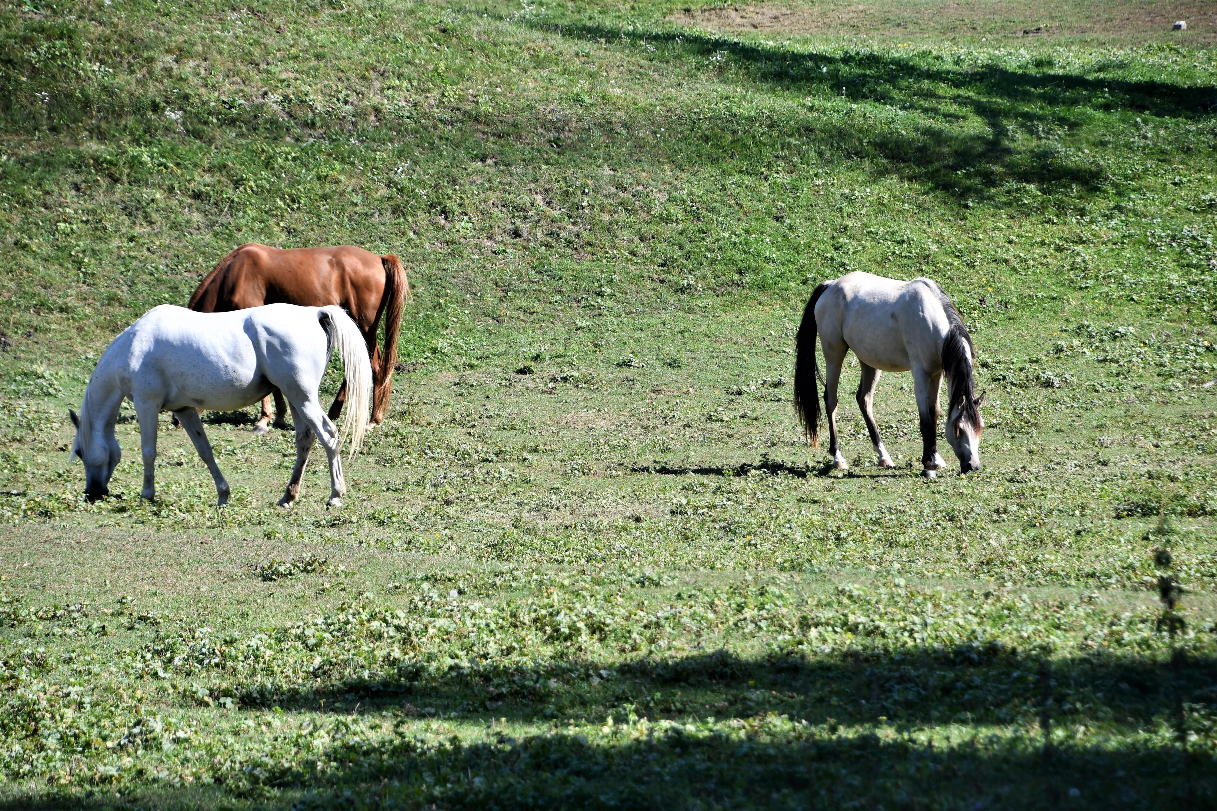 horses-17.09-1