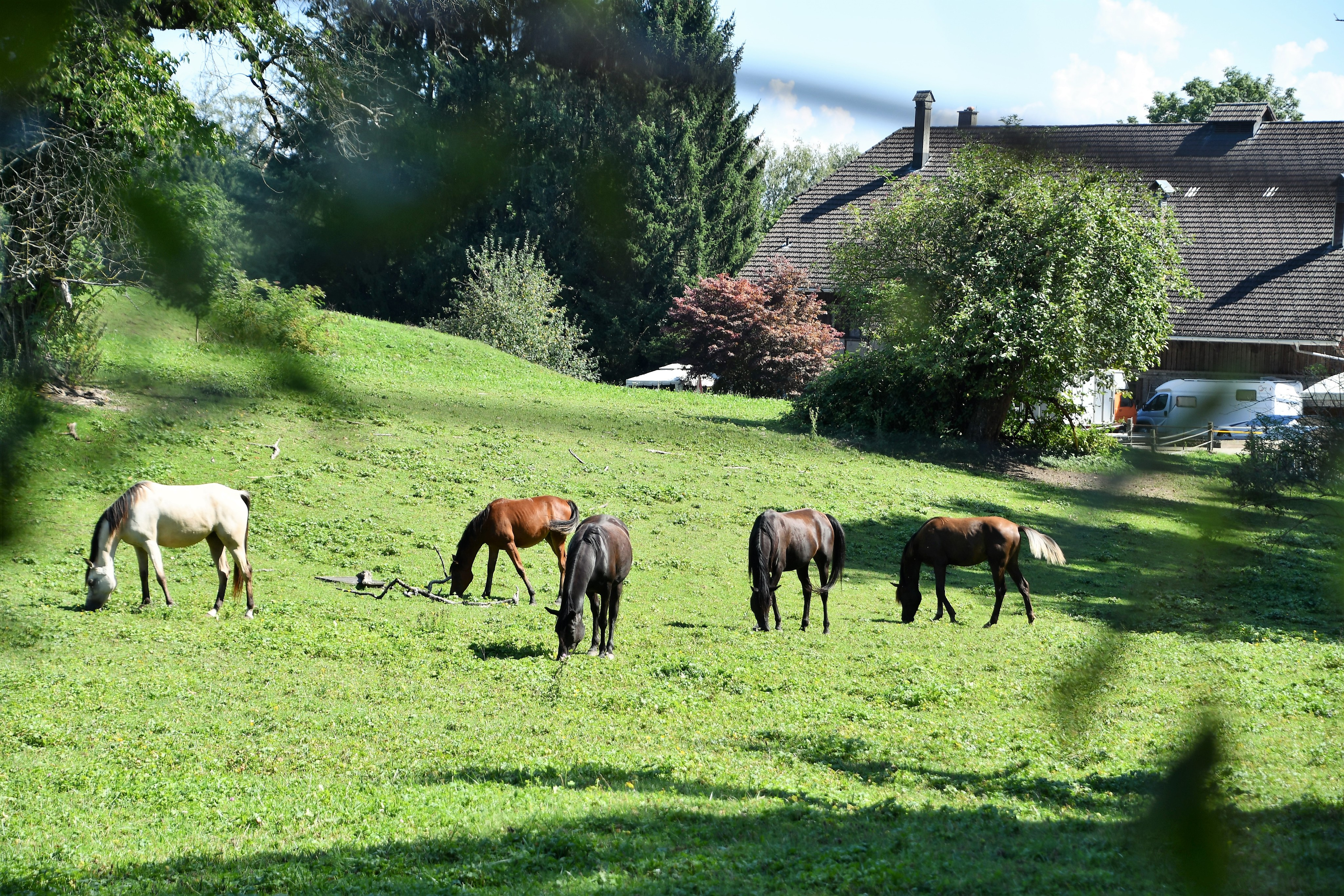 horses-25.08-5