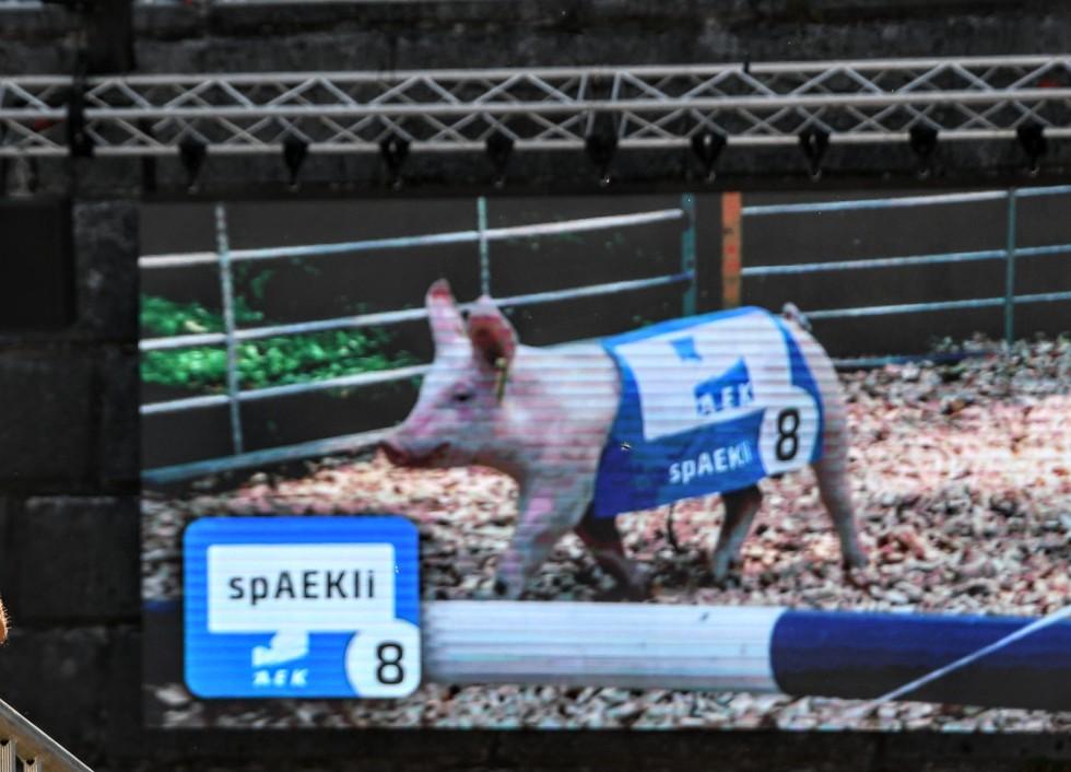 pig-racing-at-heso-2019-15