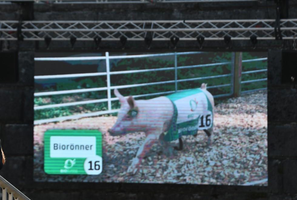 pig-racing-at-heso-2019-18