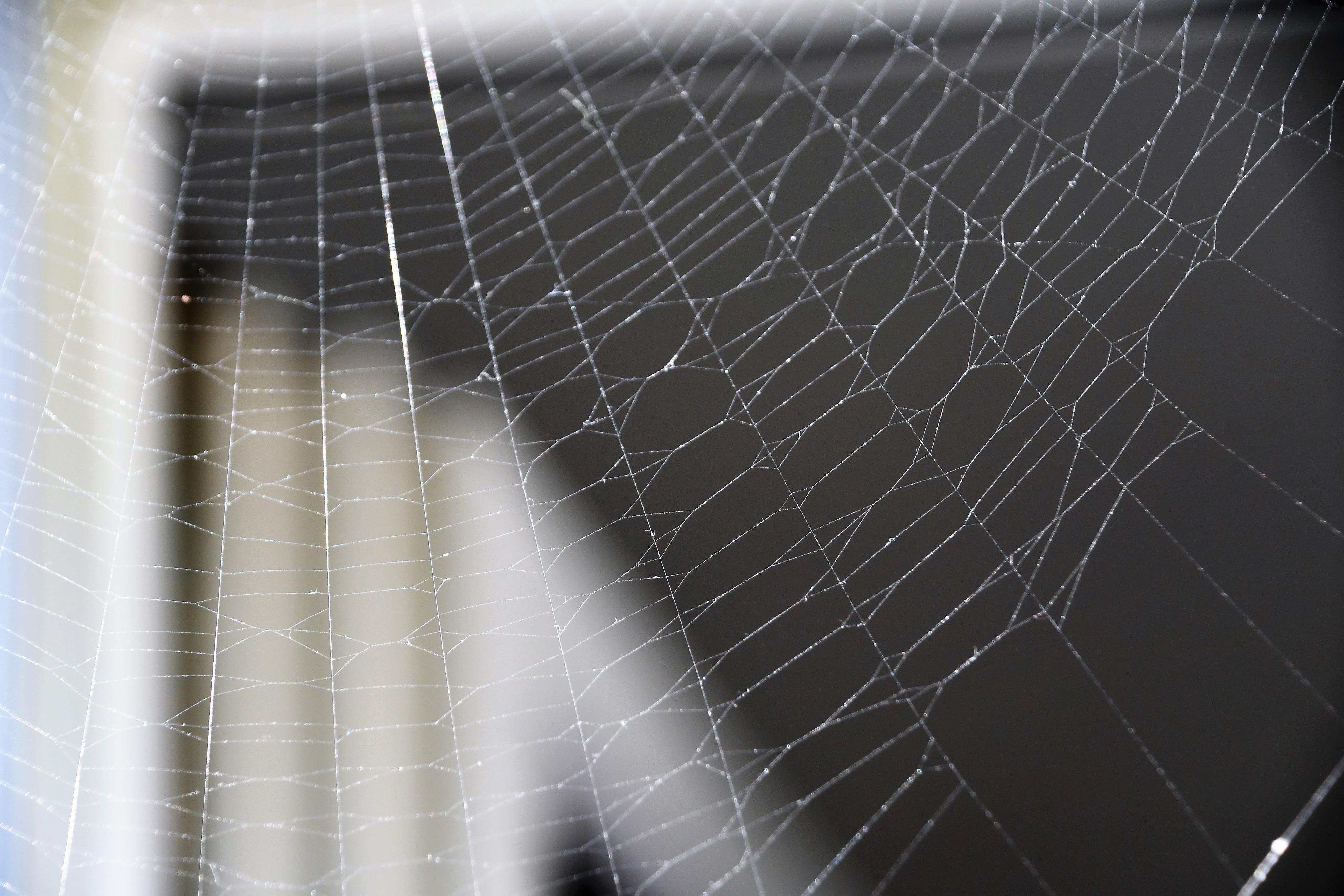 spider-web-05.09-2