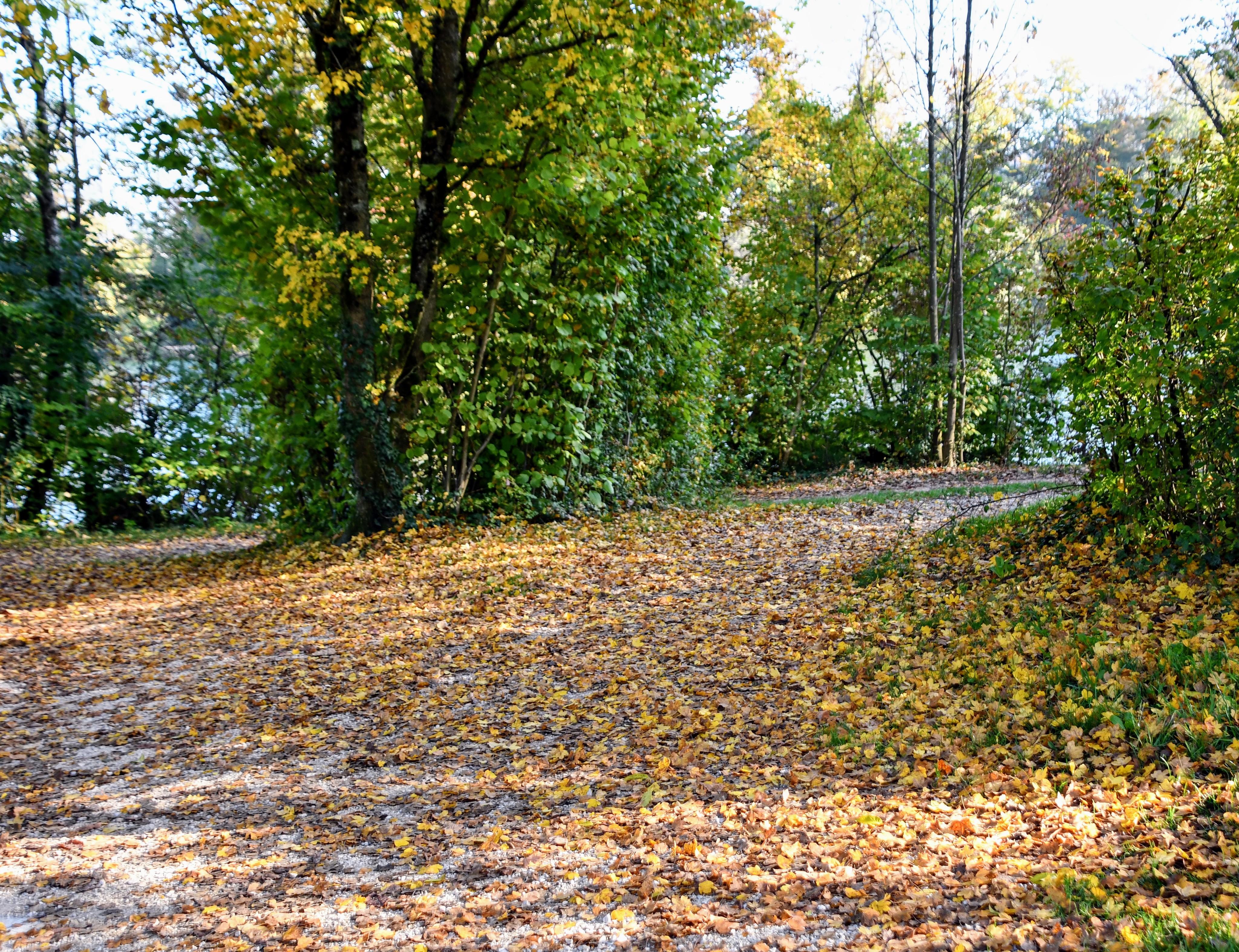 autumn-26.10-36