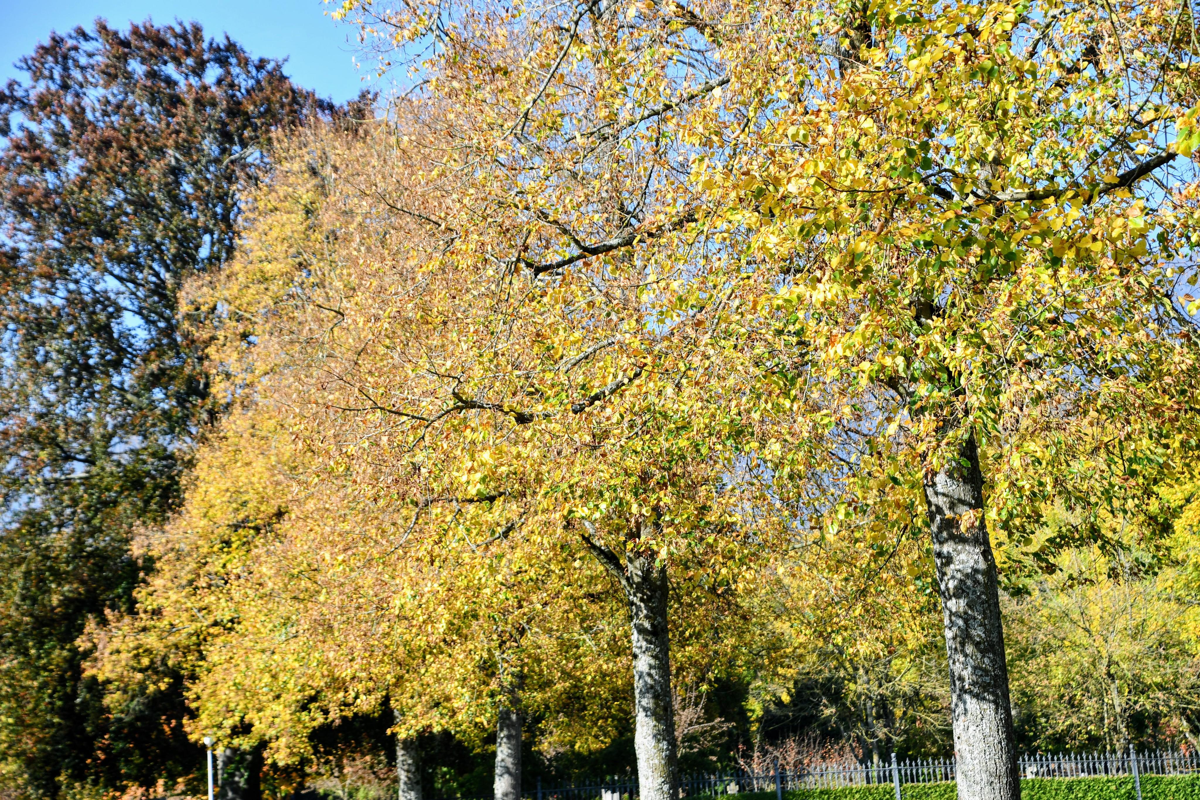 autumn-26.10-5