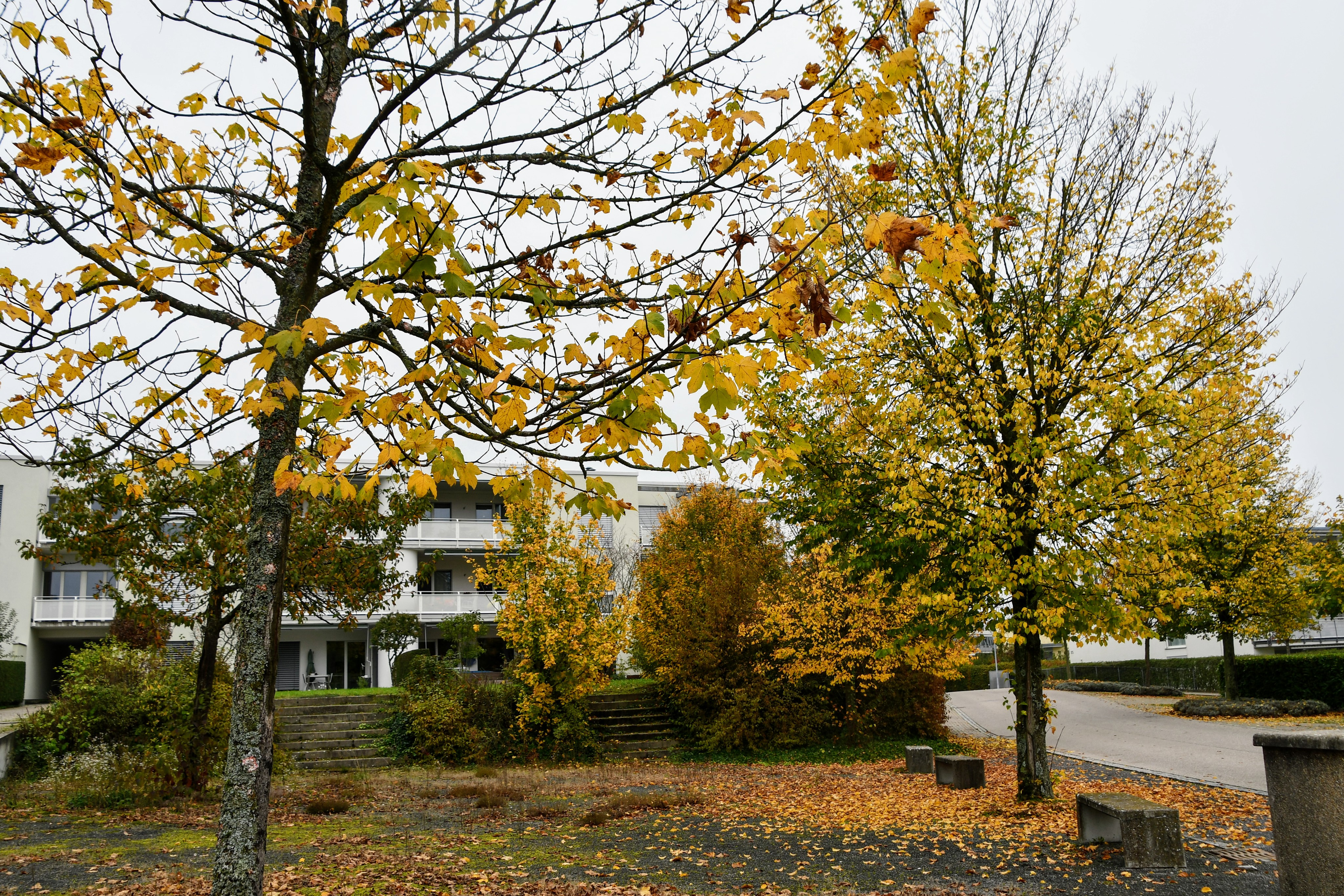 autumn-trees-and-leaves-20.10-54