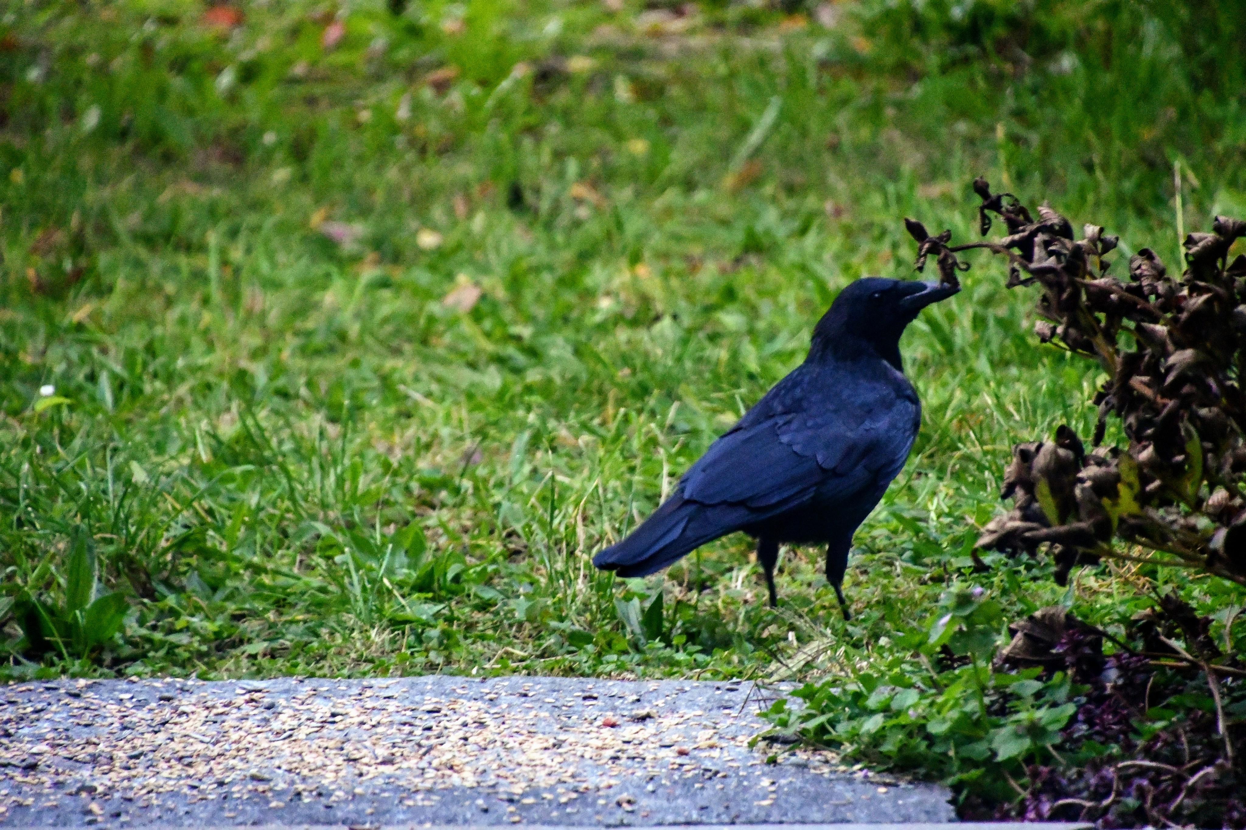 crow-17.10-2