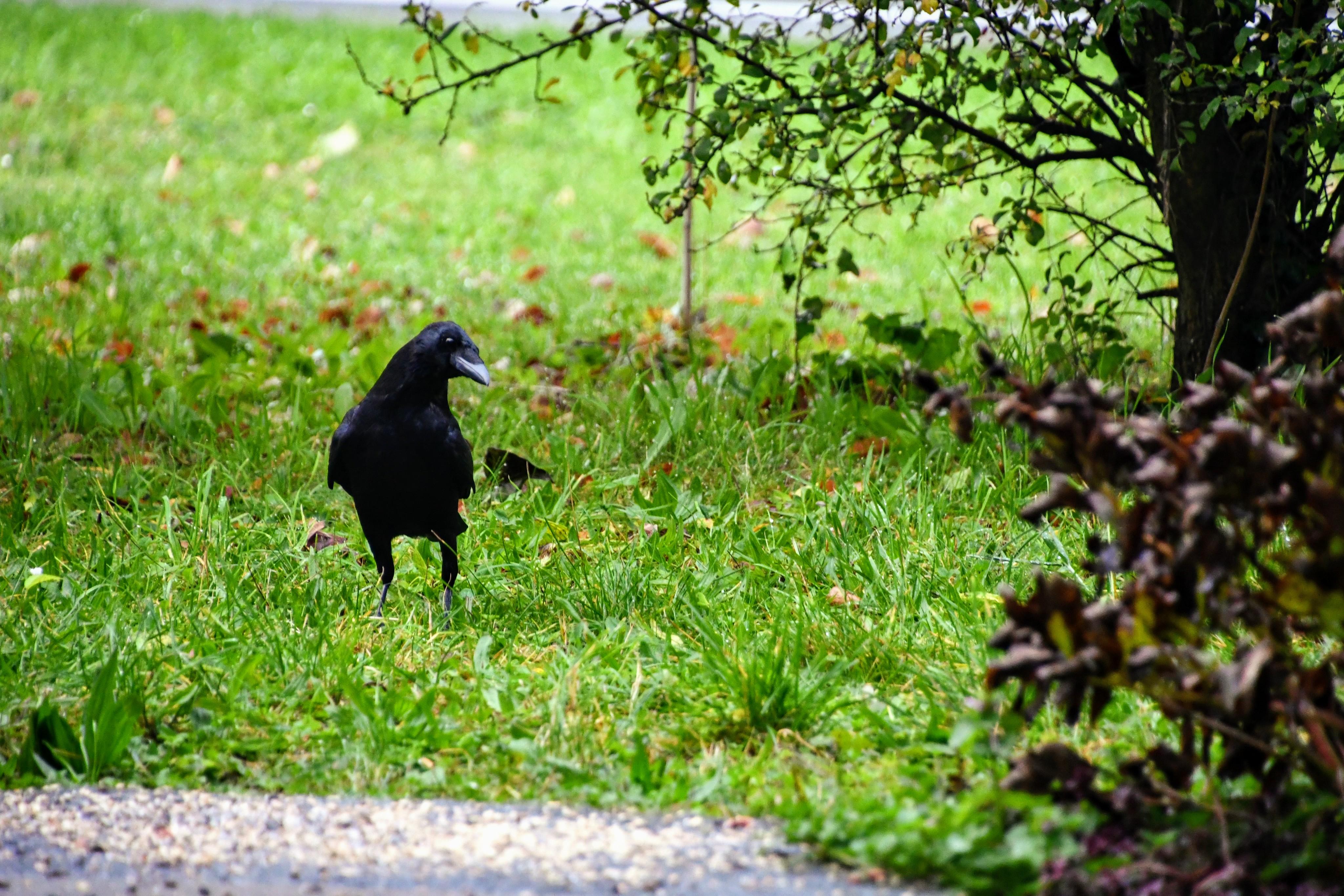 crow-18.10-1