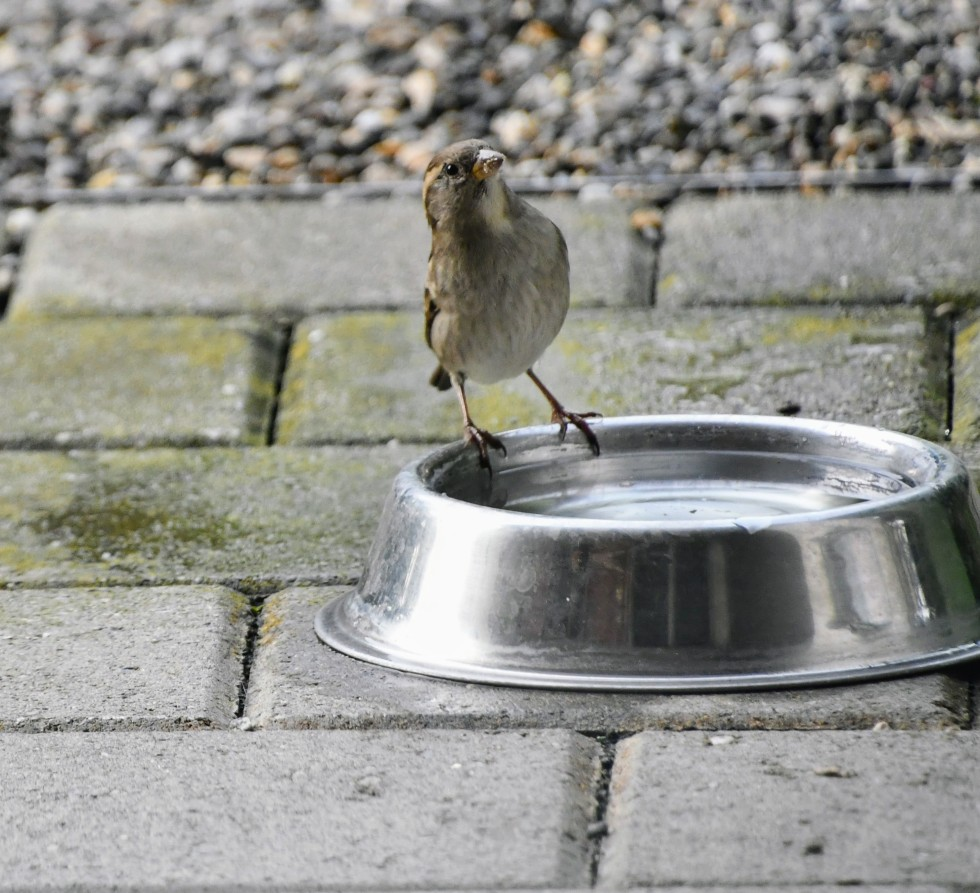 sparrow-27.10-6