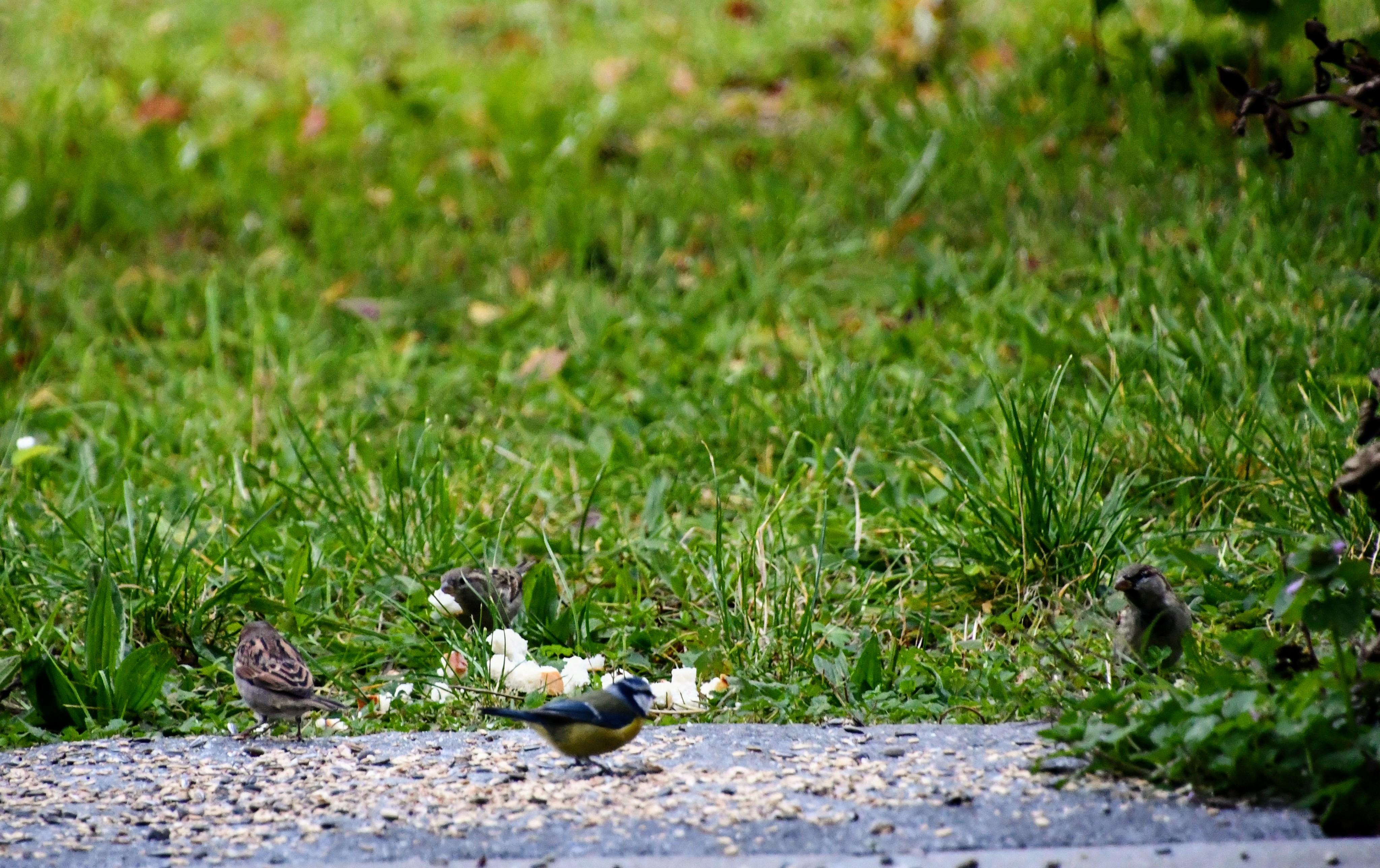 sparrows-17.10-6
