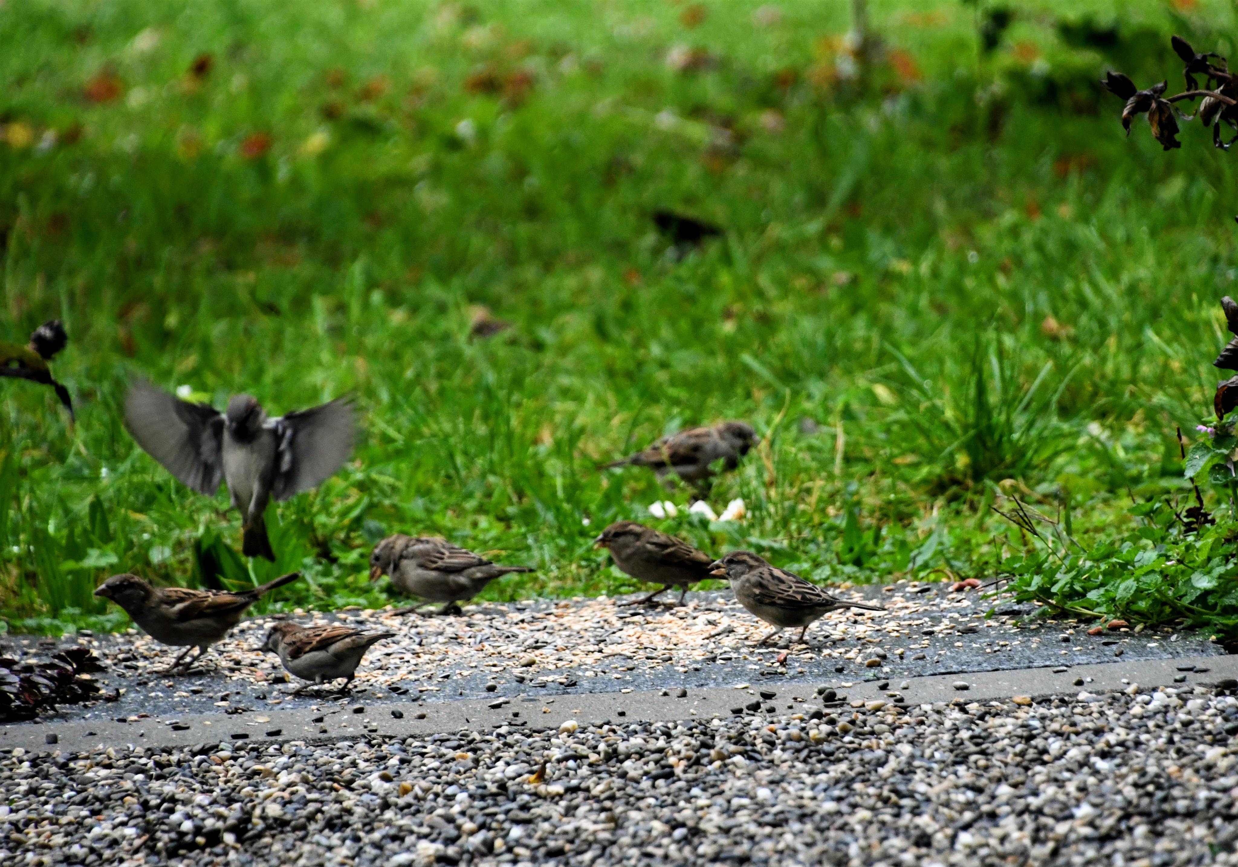 sparrows-18.10-4