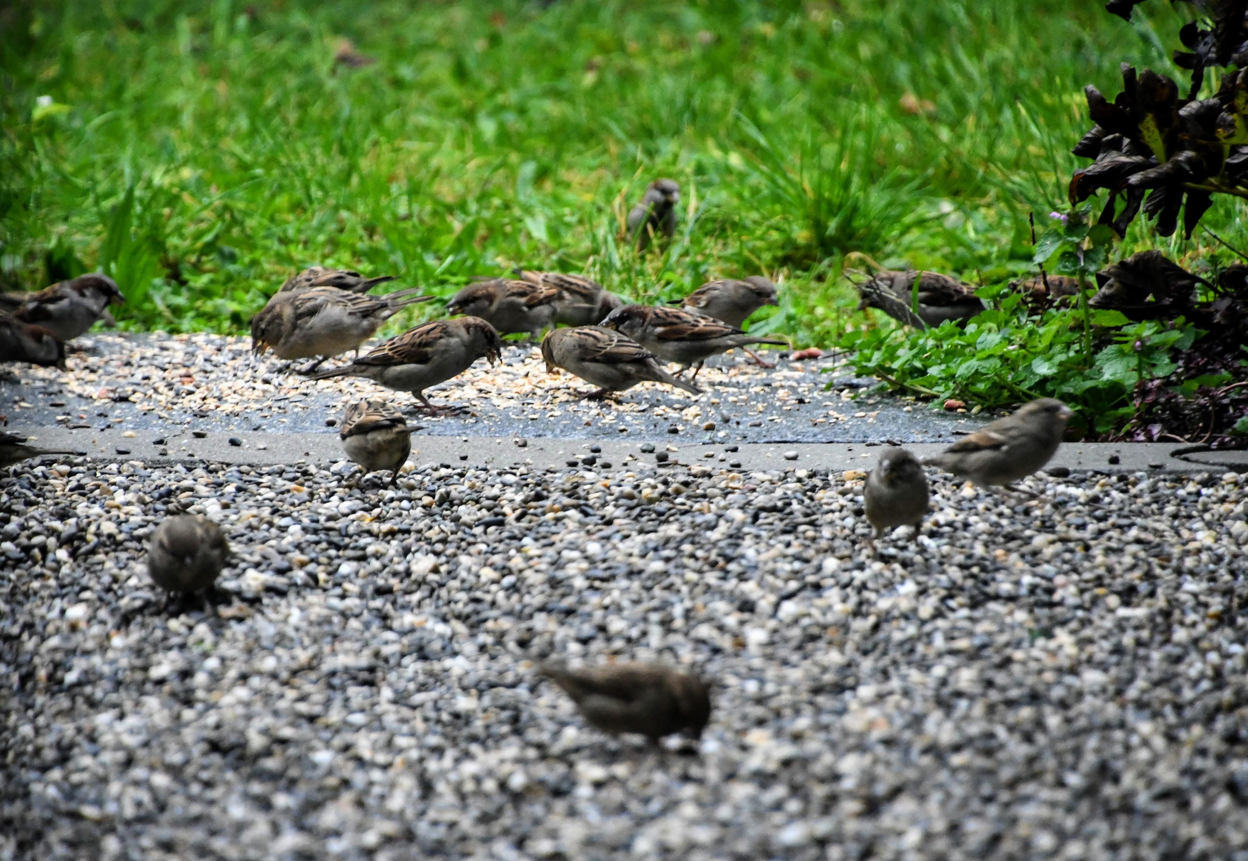 sparrows-18.10-5