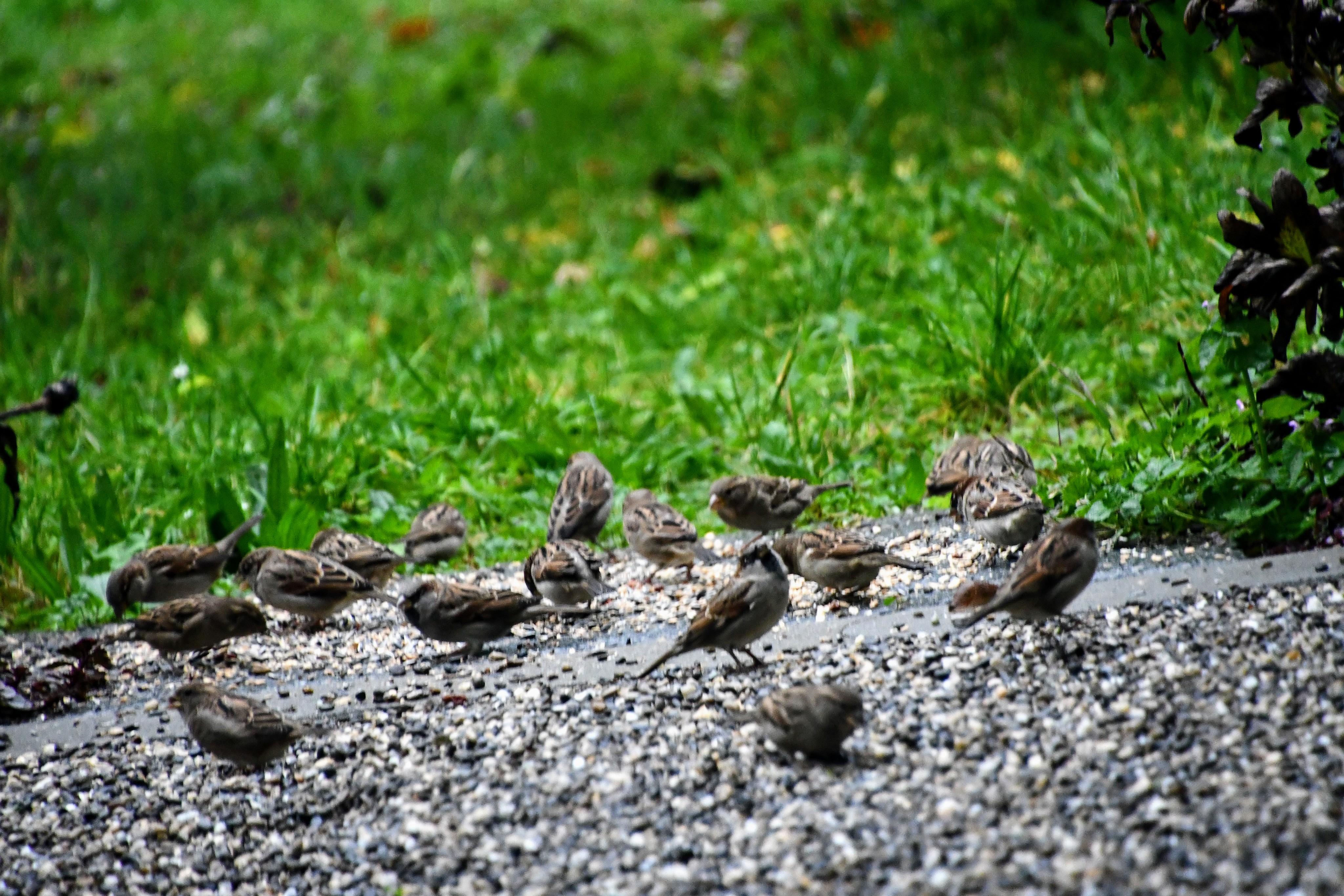 sparrows-21.10-2