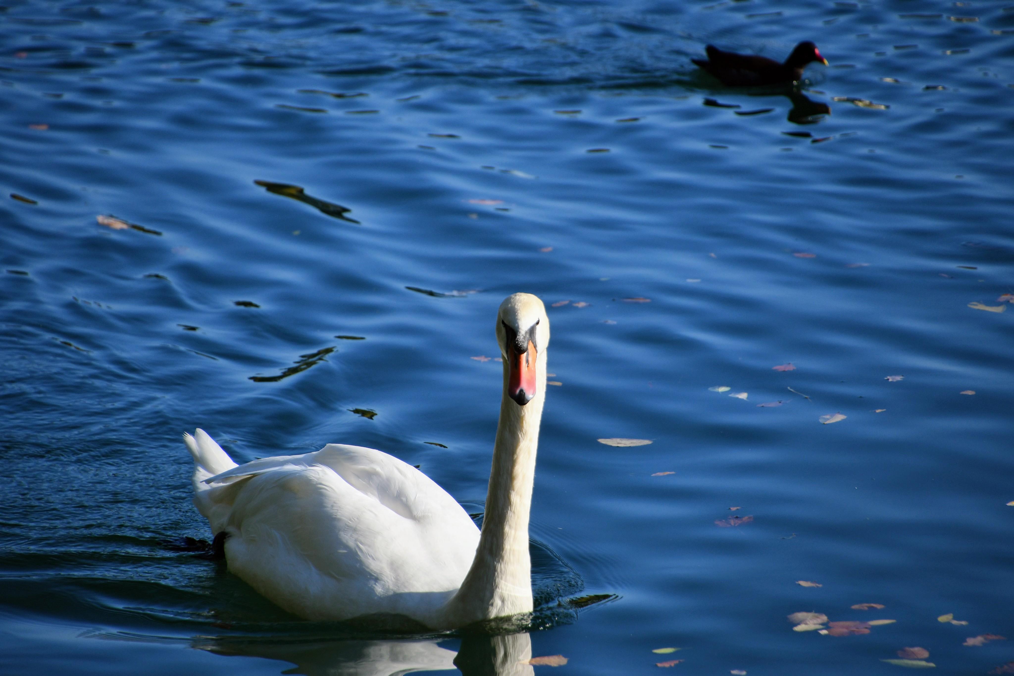 swan-26.10-3