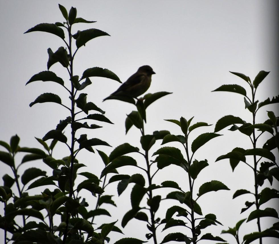 bird-08.11-1