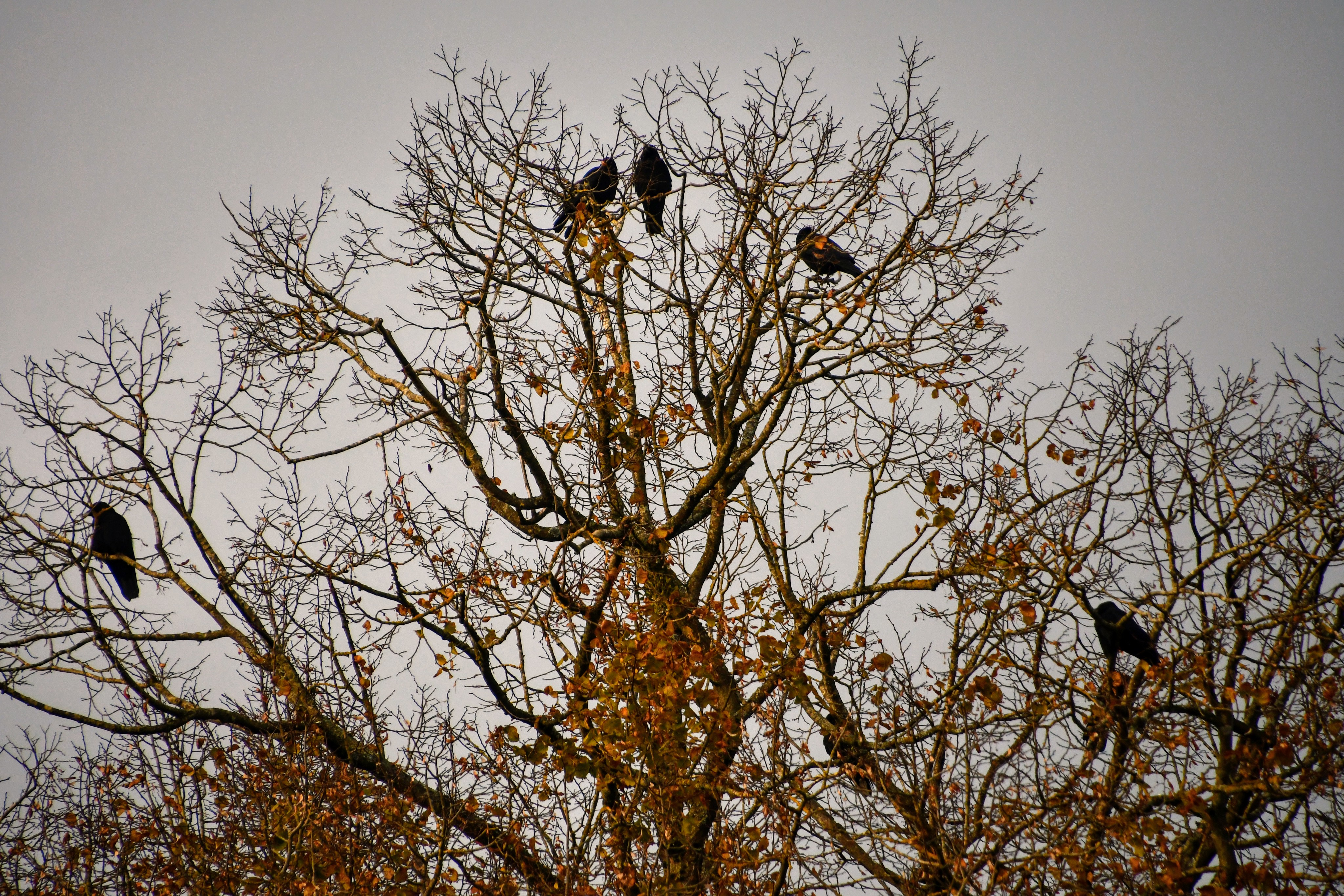 crows-23.11-5