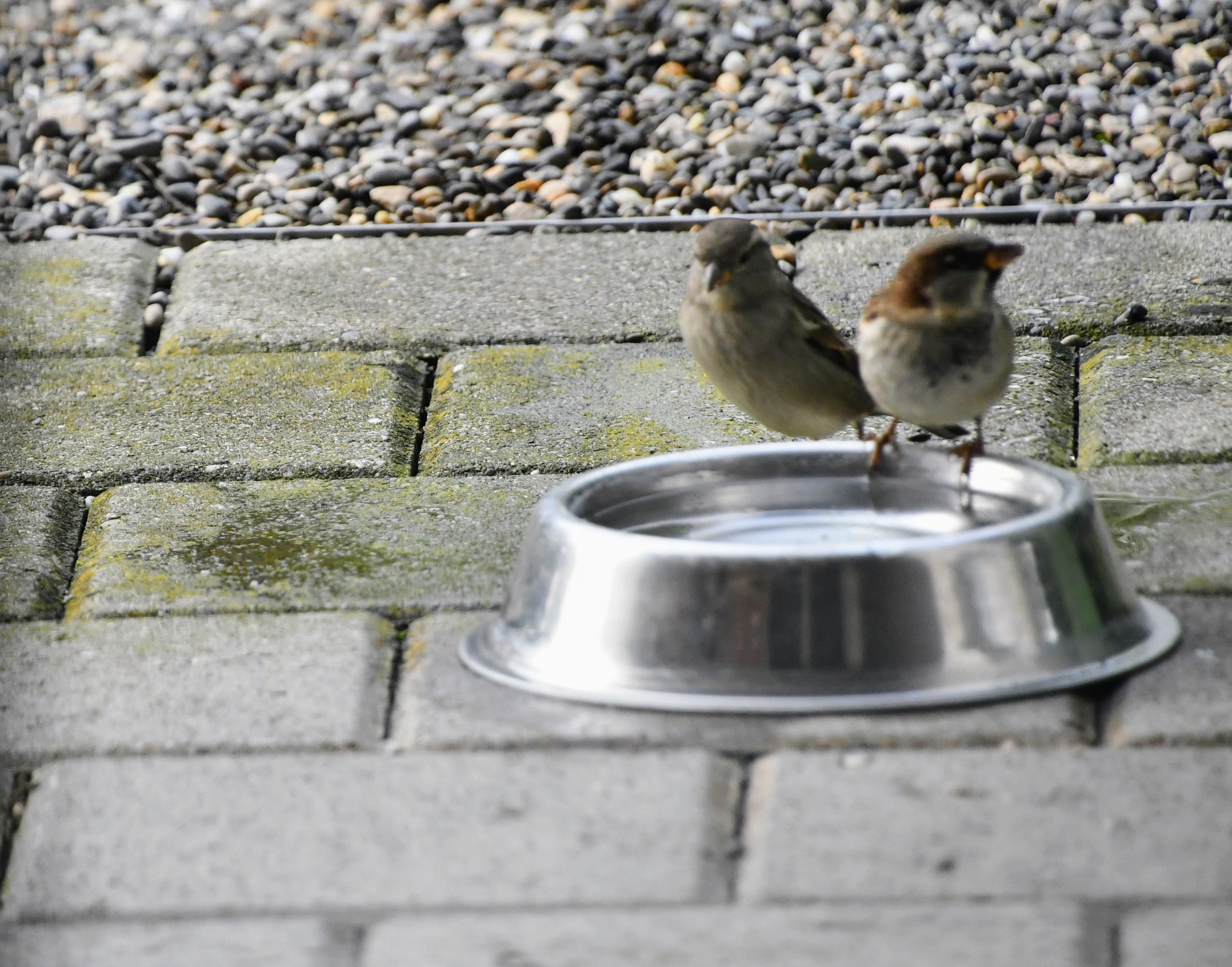 sparrow-27.10-4