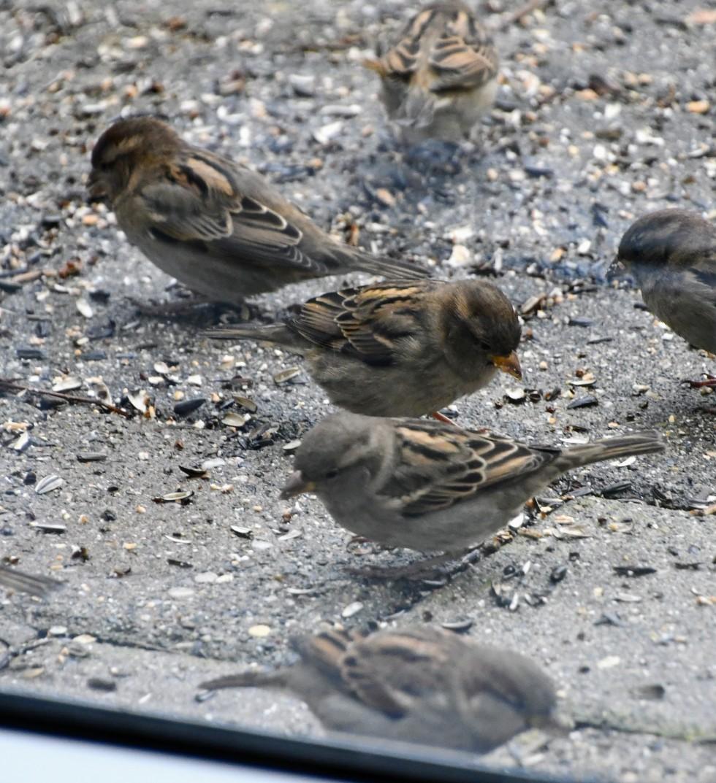 sparrows-07-2