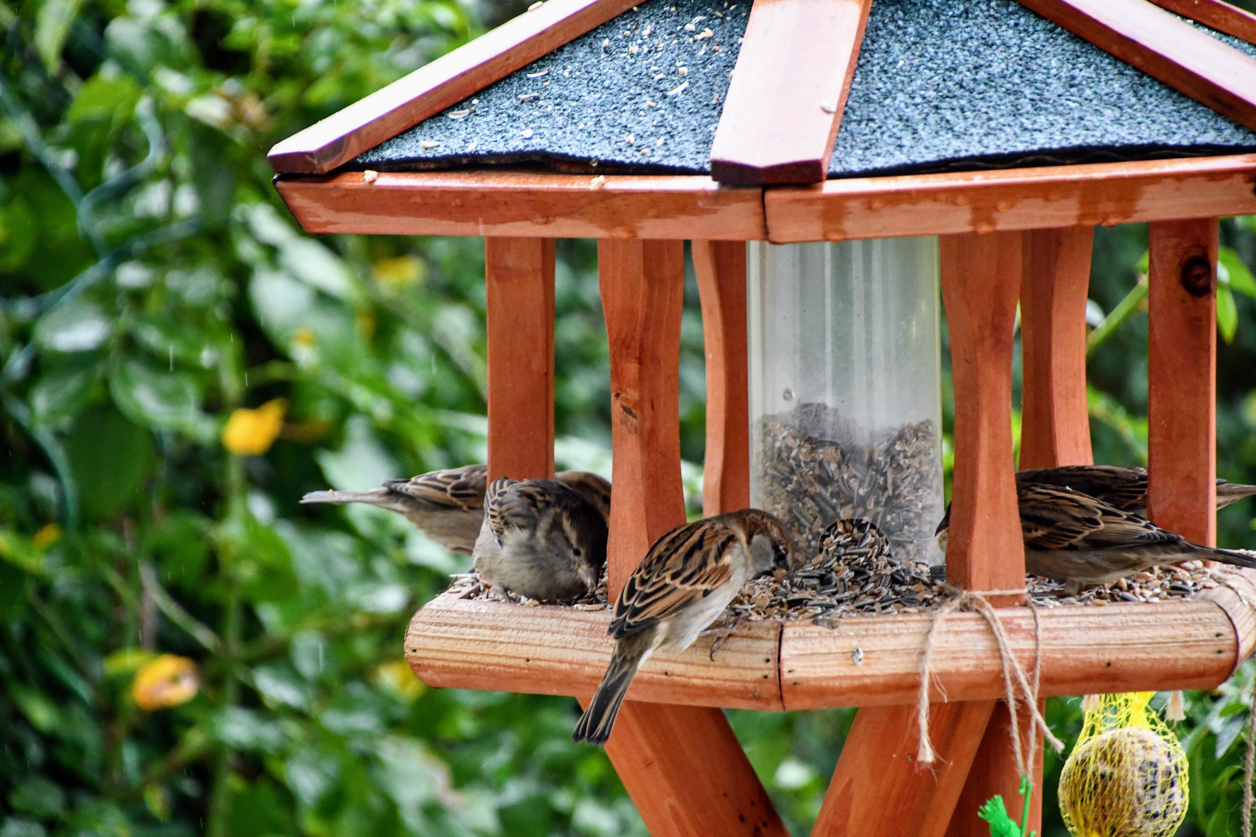 sparrows-07.11-6