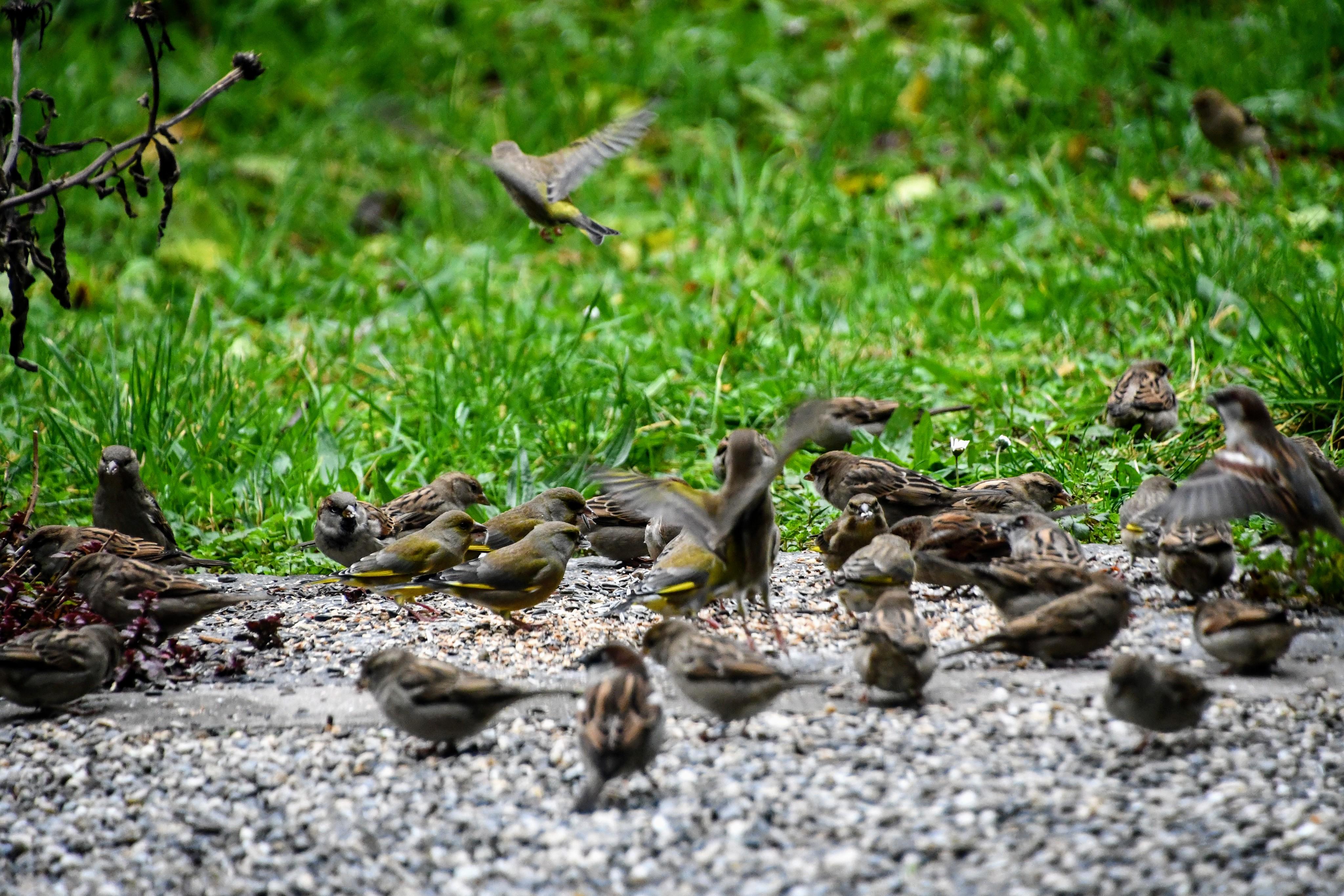 sparrows-09.11-5