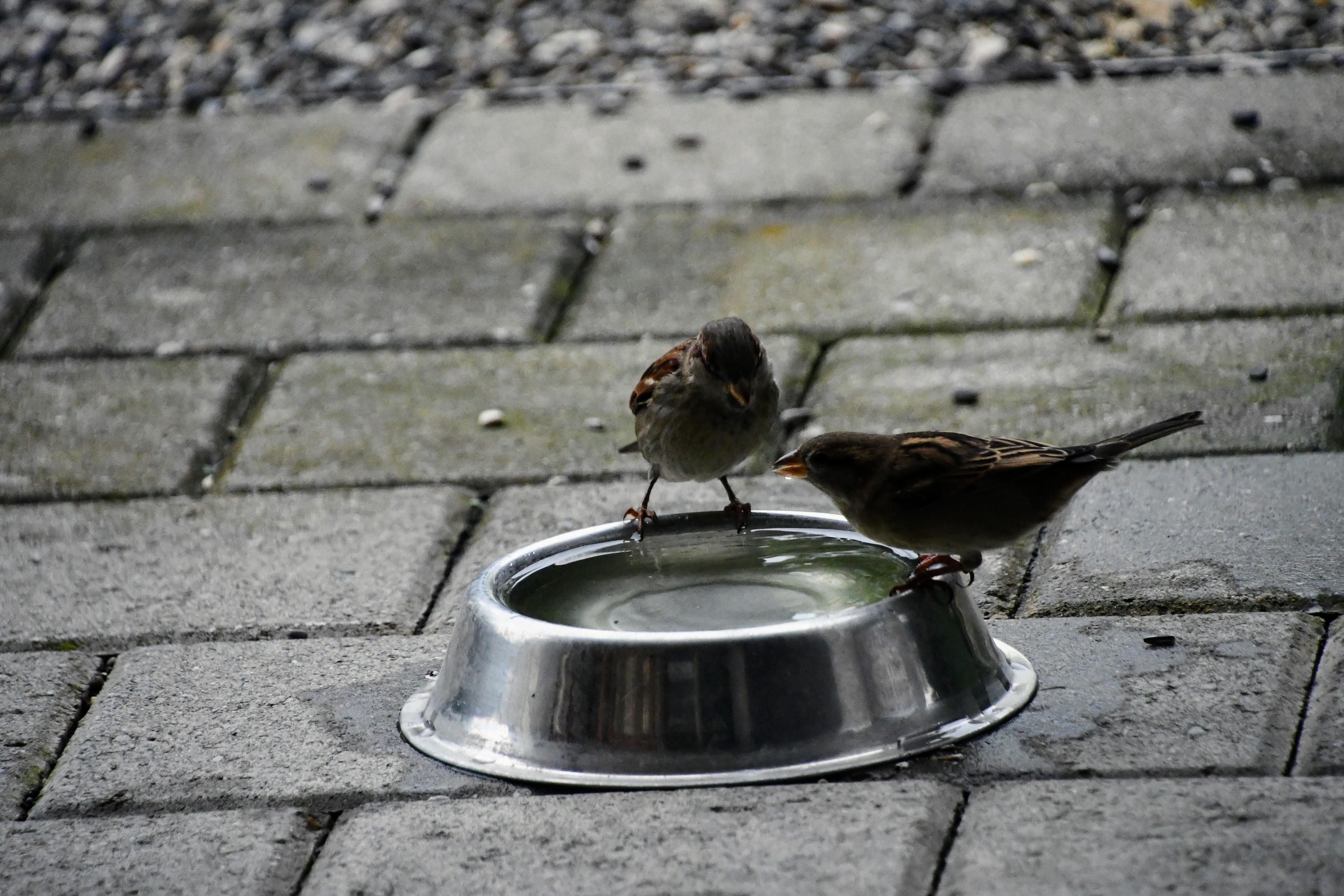sparrows-11.11-6