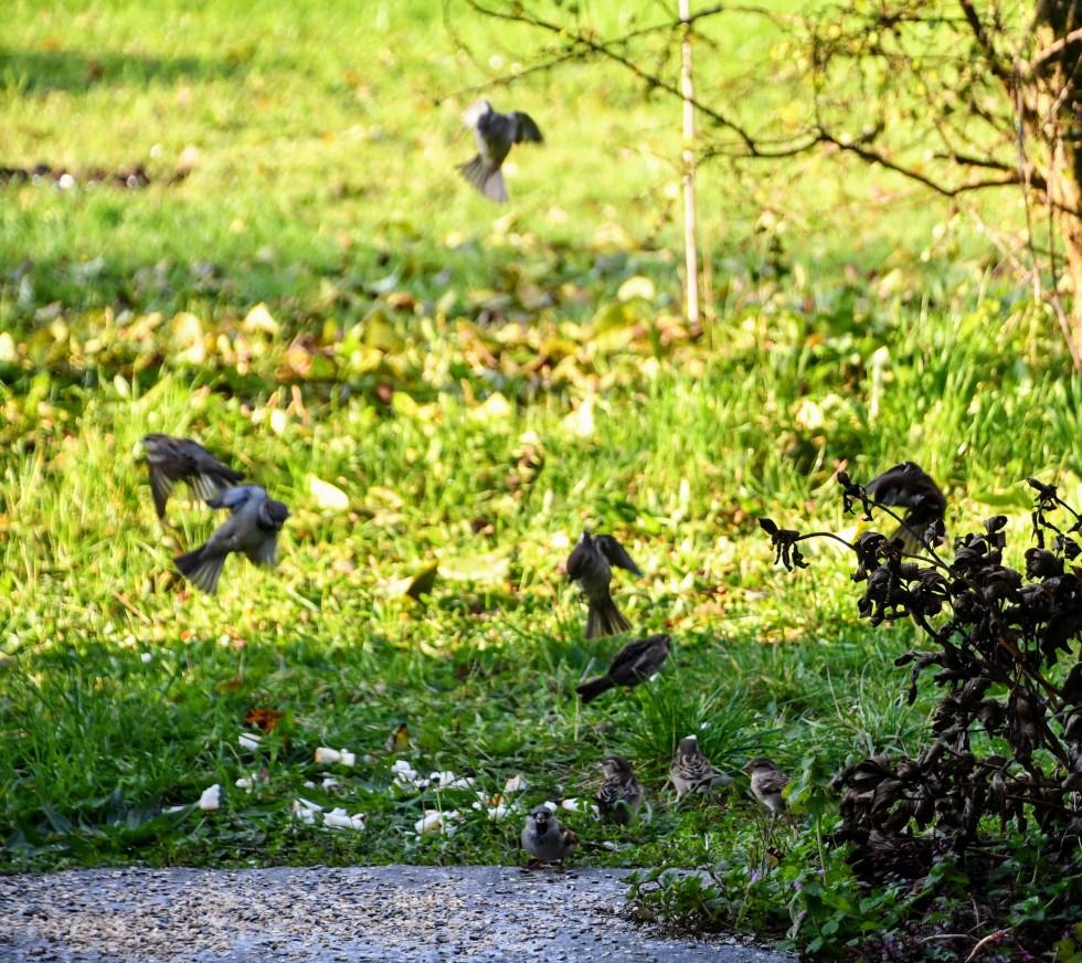 sparrows-13.11-3