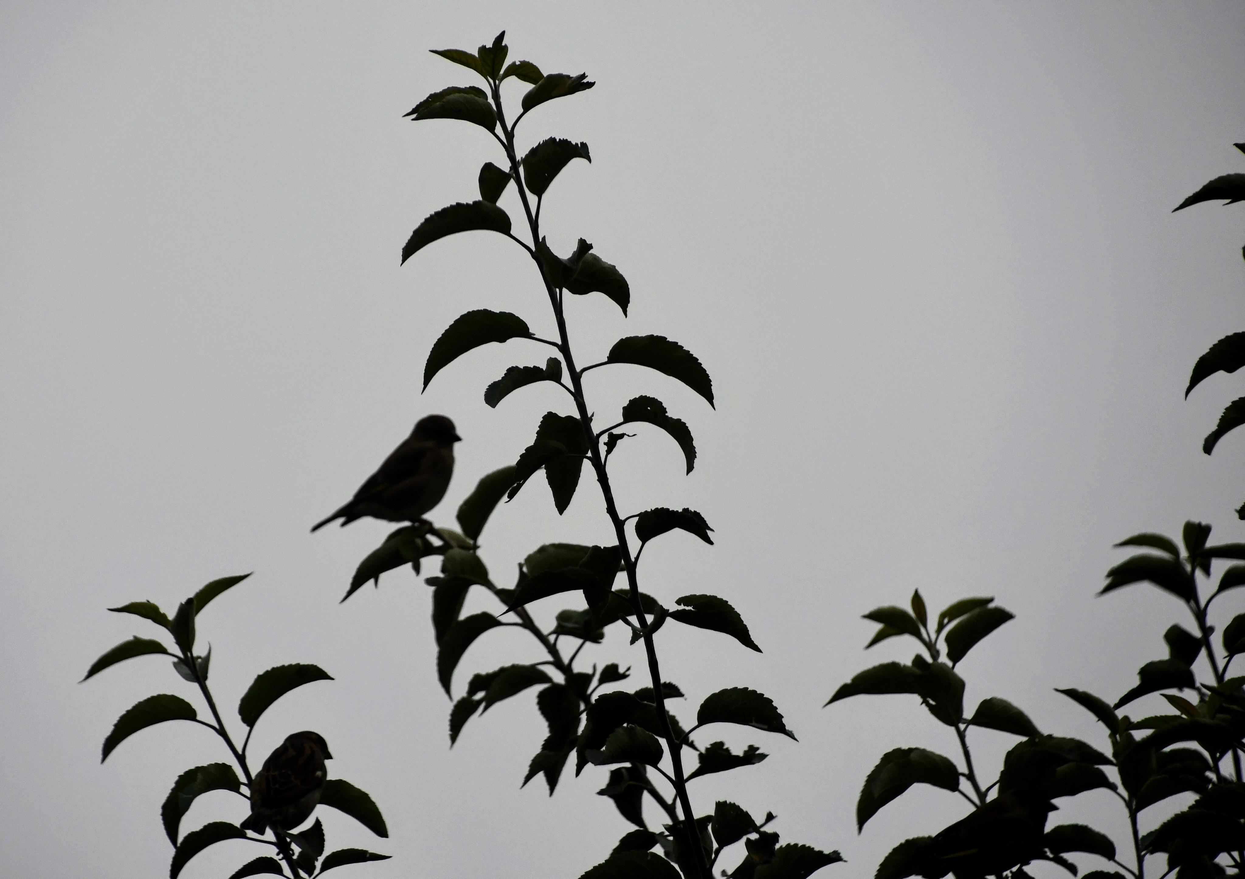 sparrows-14.11-2