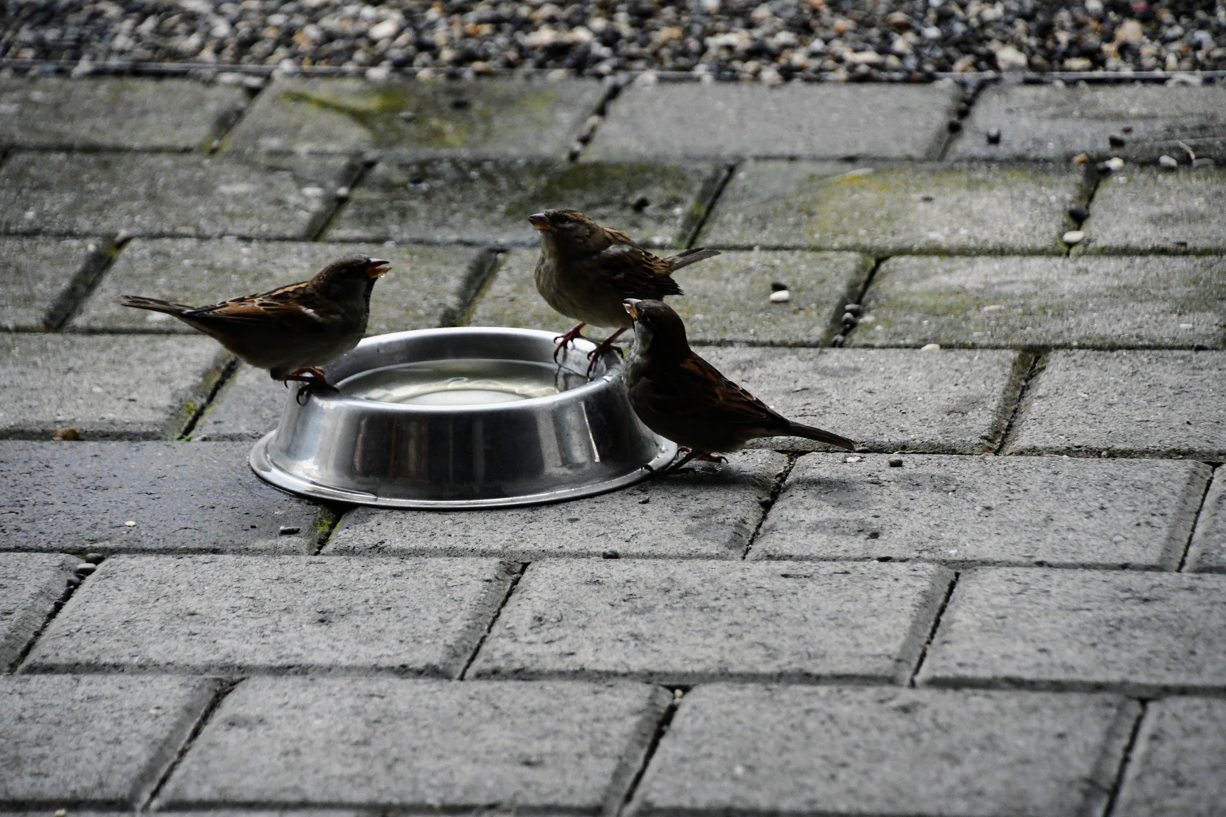 sparrows-17.11-4