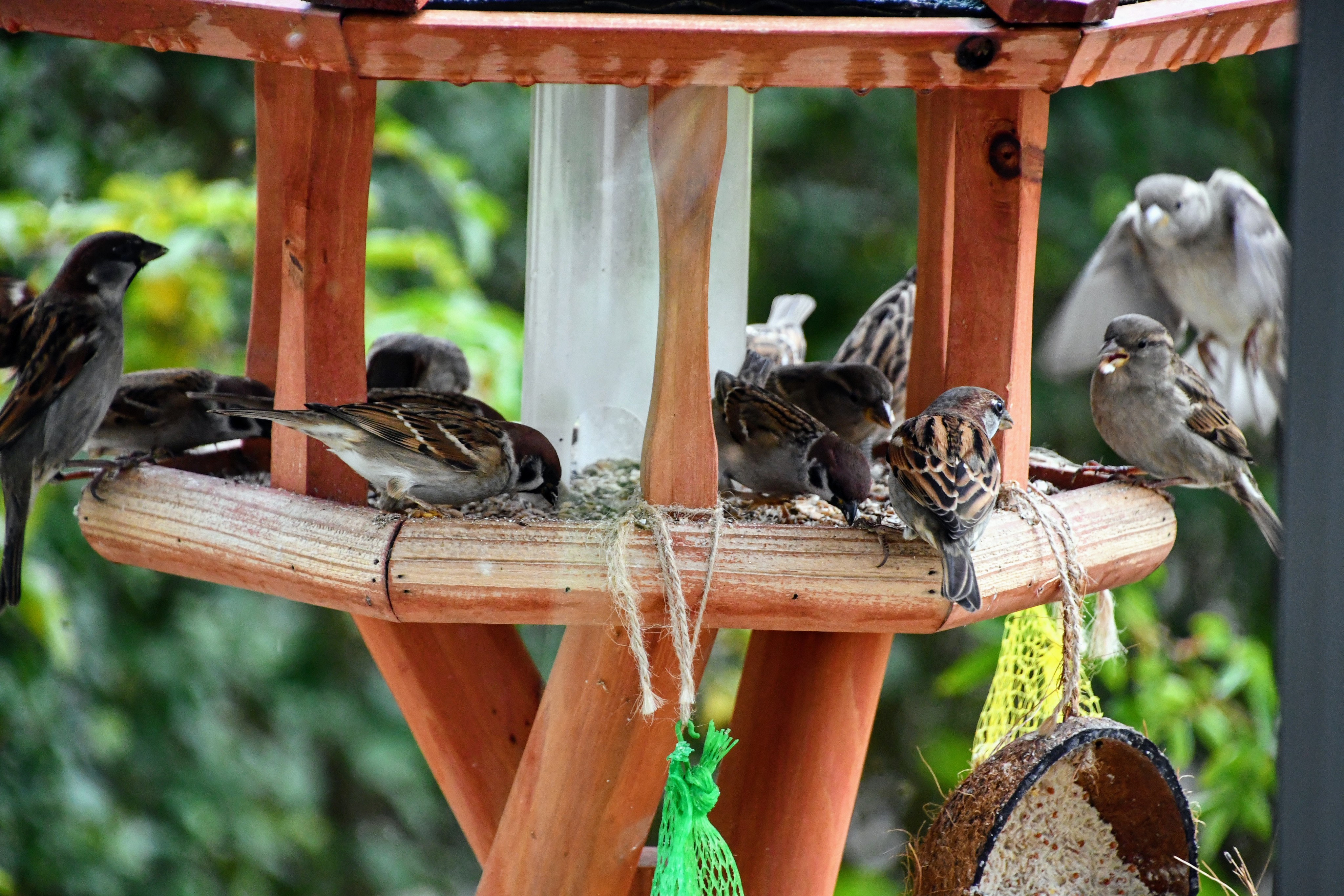 sparrows-28.11-8