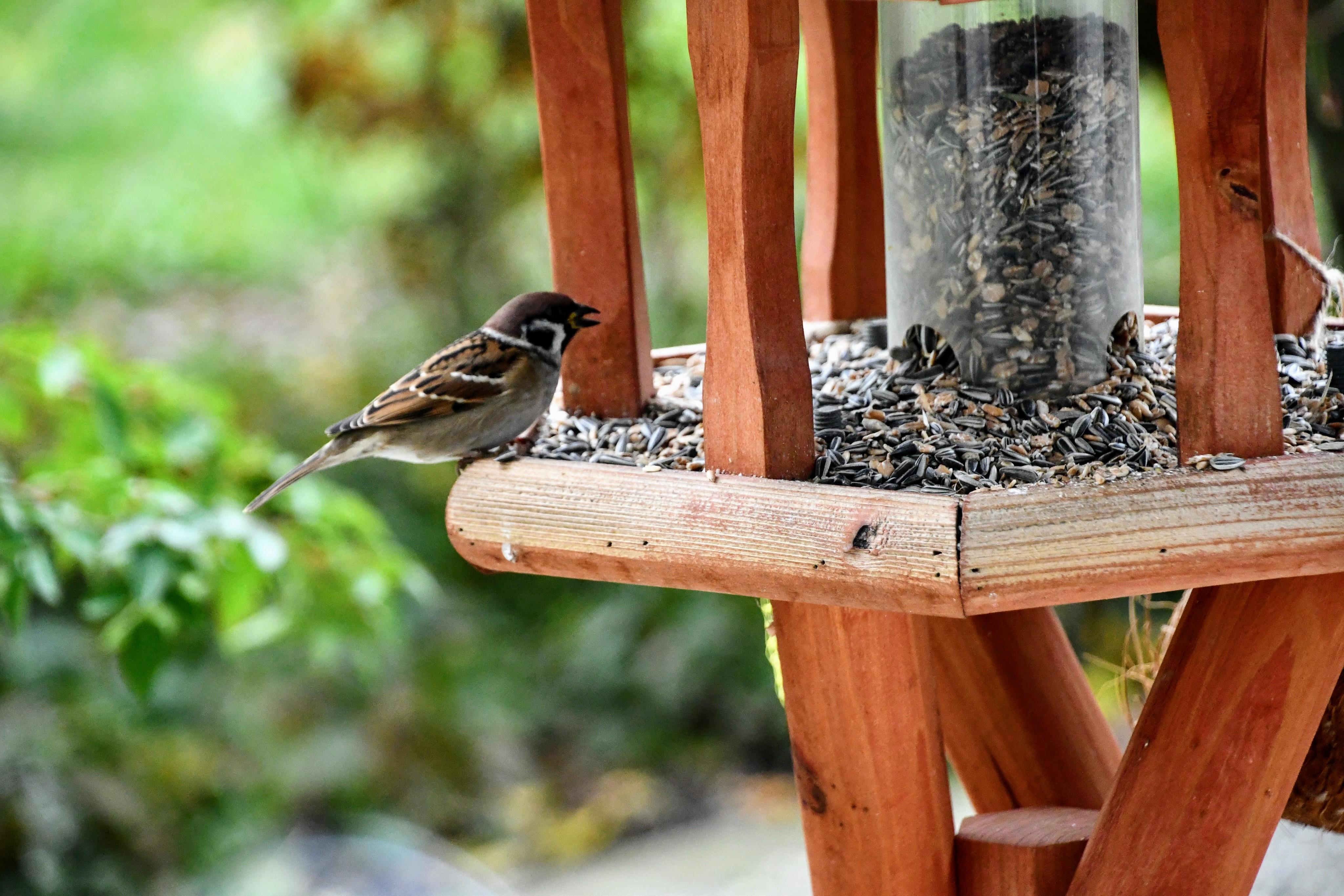 unknown-bird-sparrow-perhaps-3