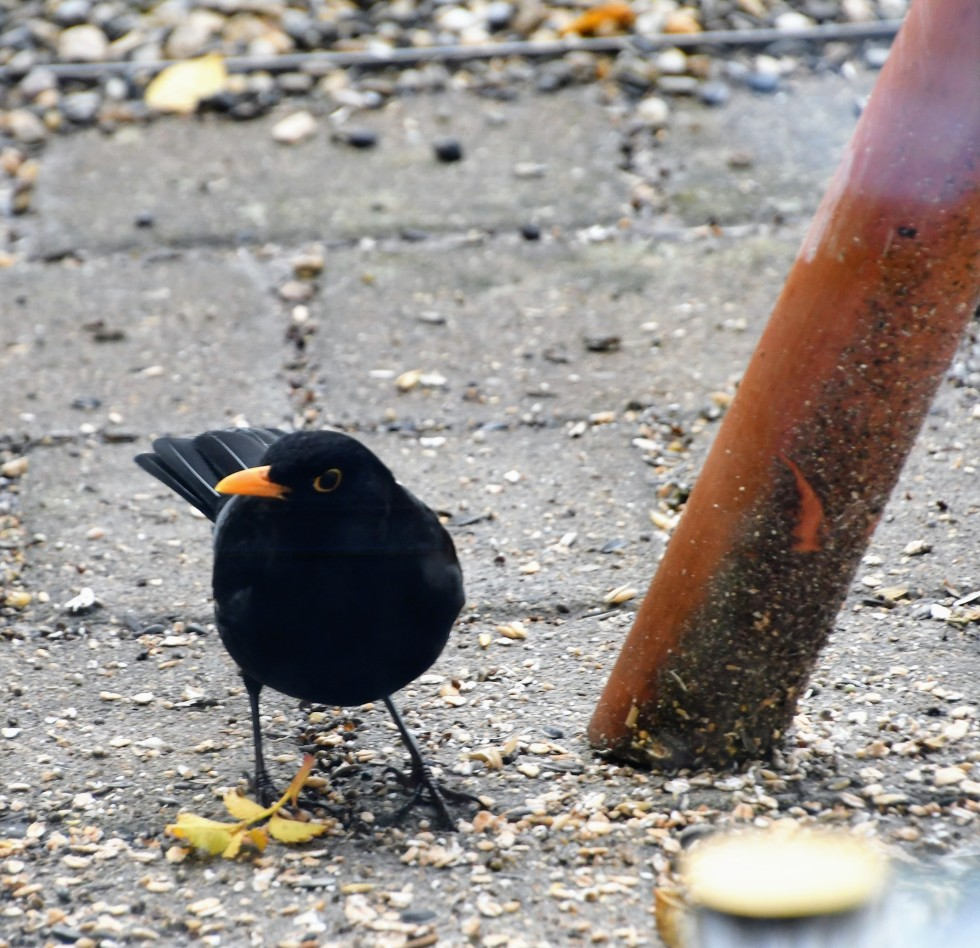 blackbird-19.12-4