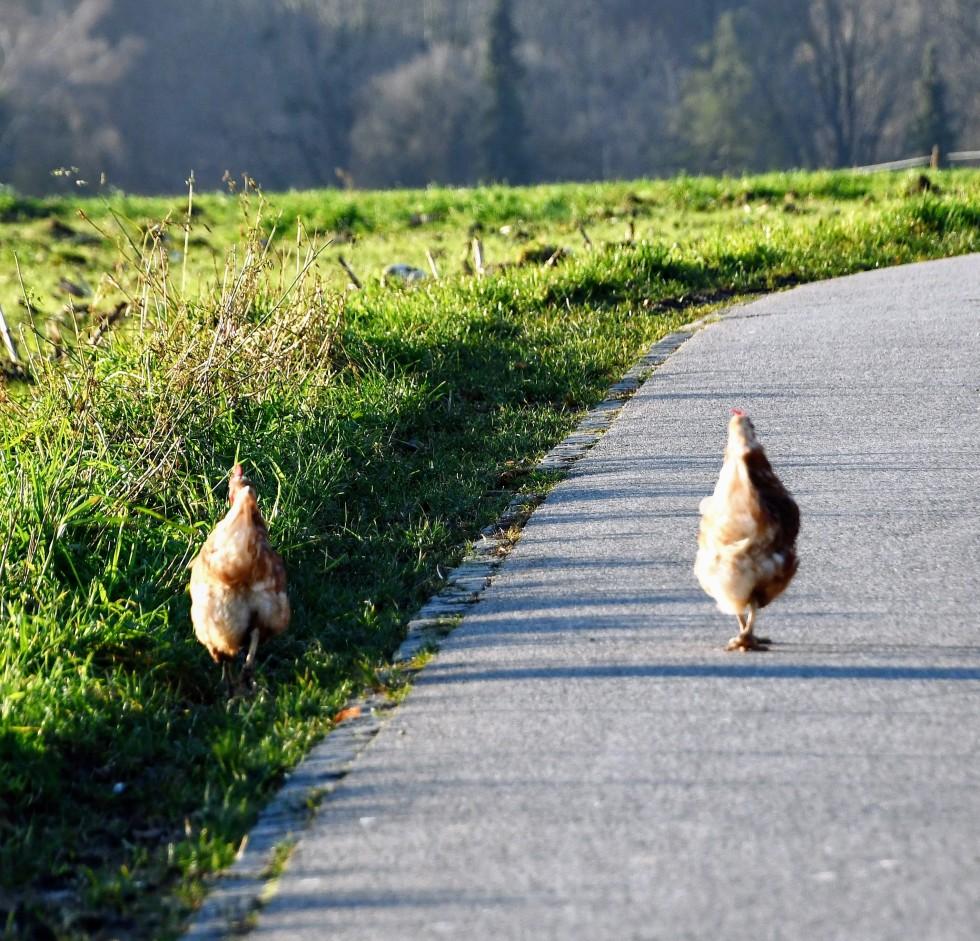 chicken-29.12-6