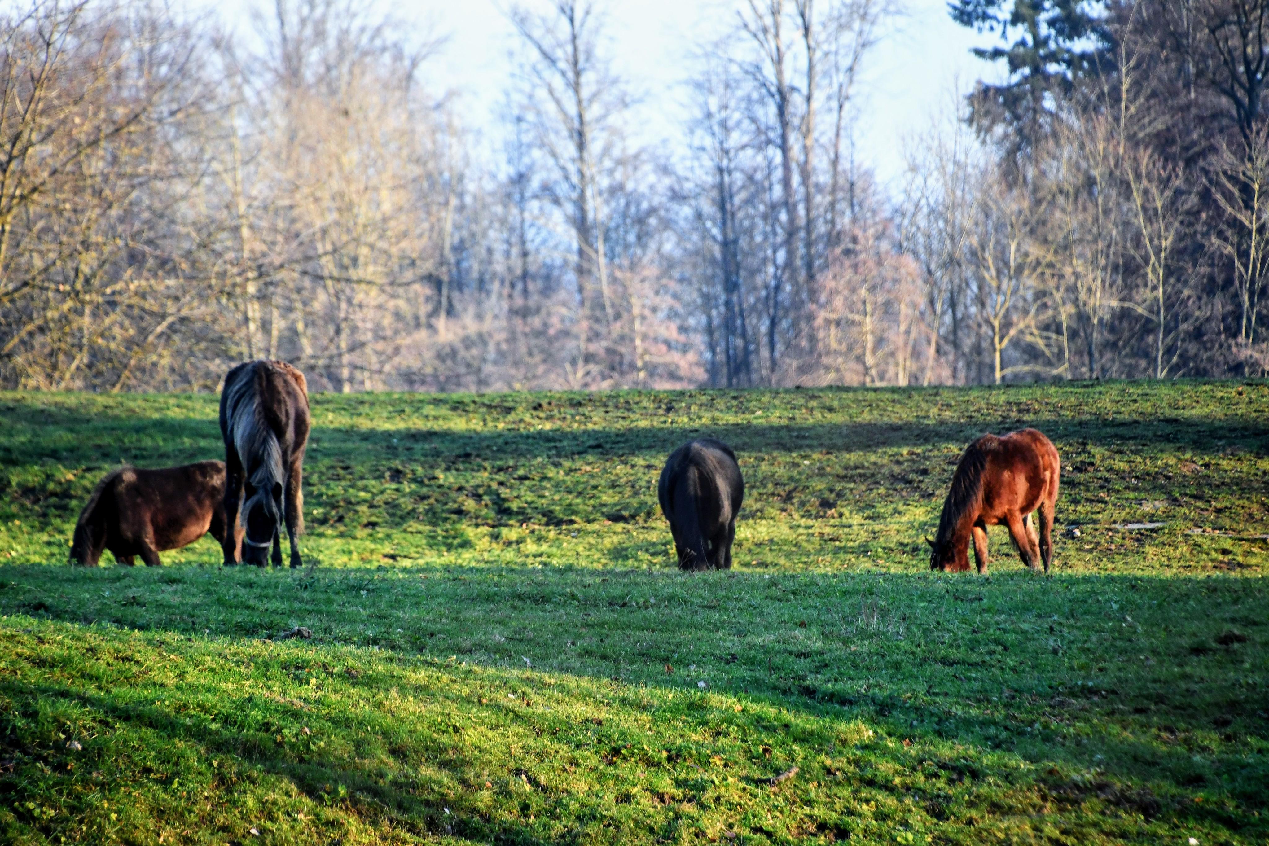 horses-29.12-1