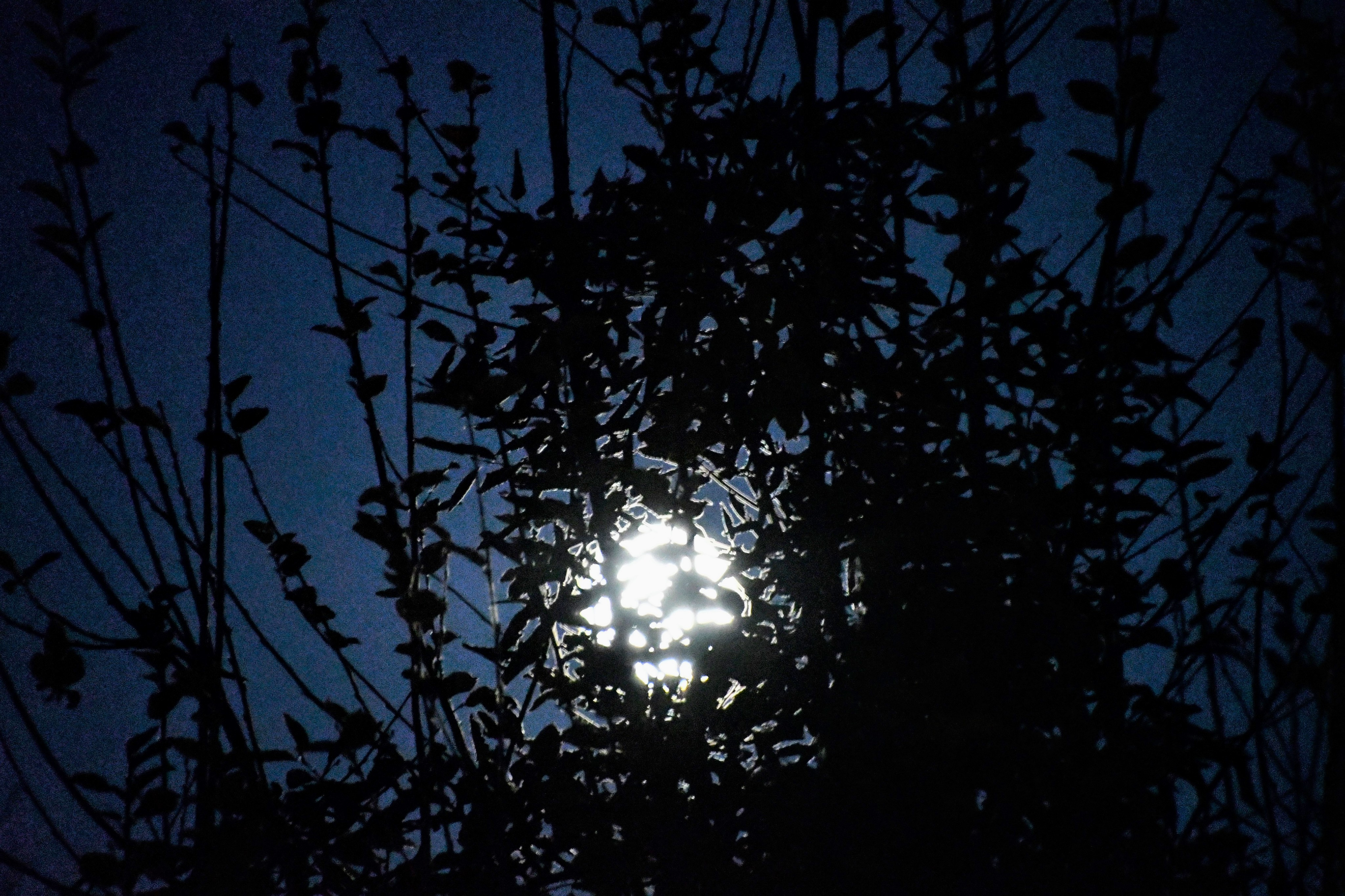 moon-10.12-1