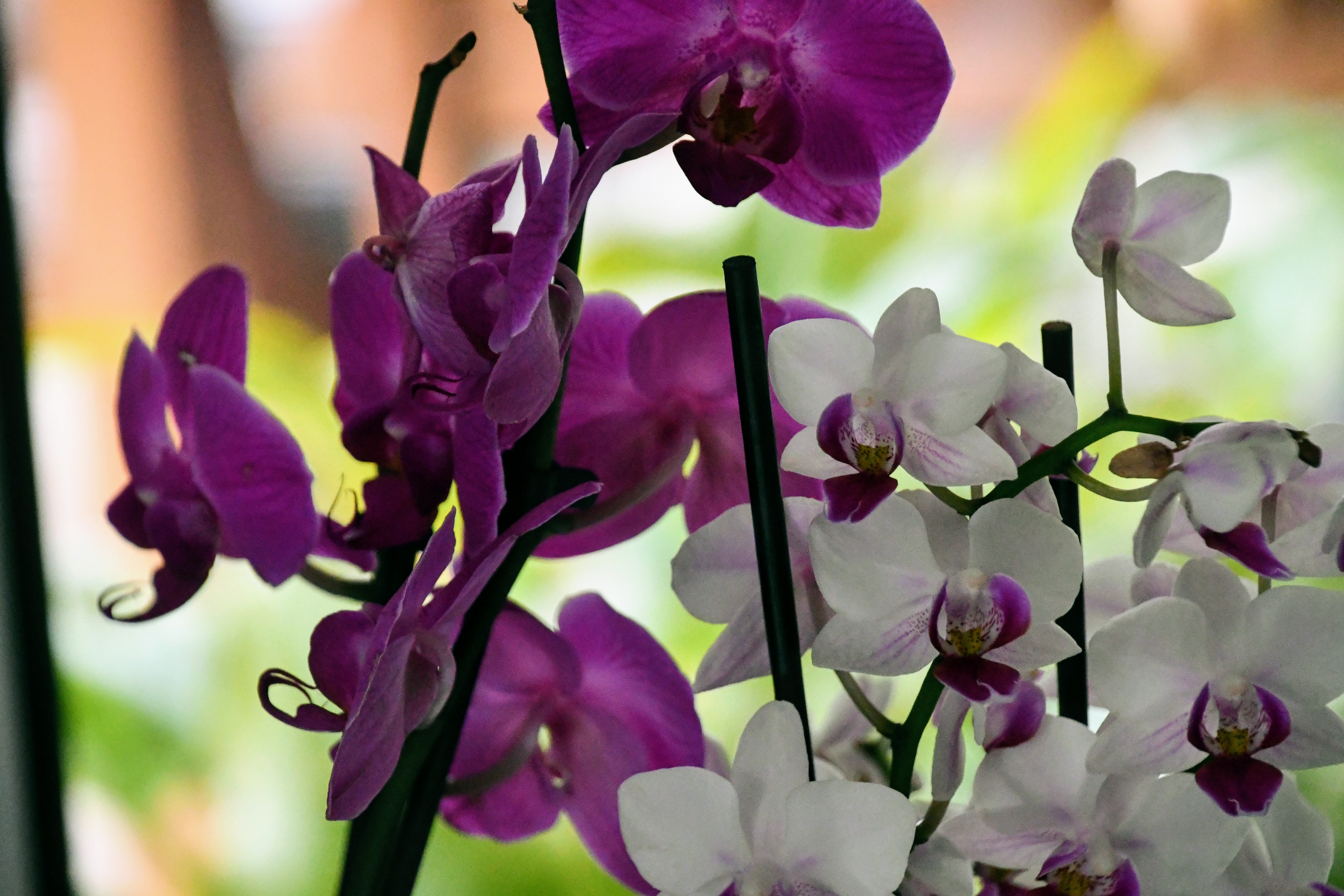 orchids-30.11-2