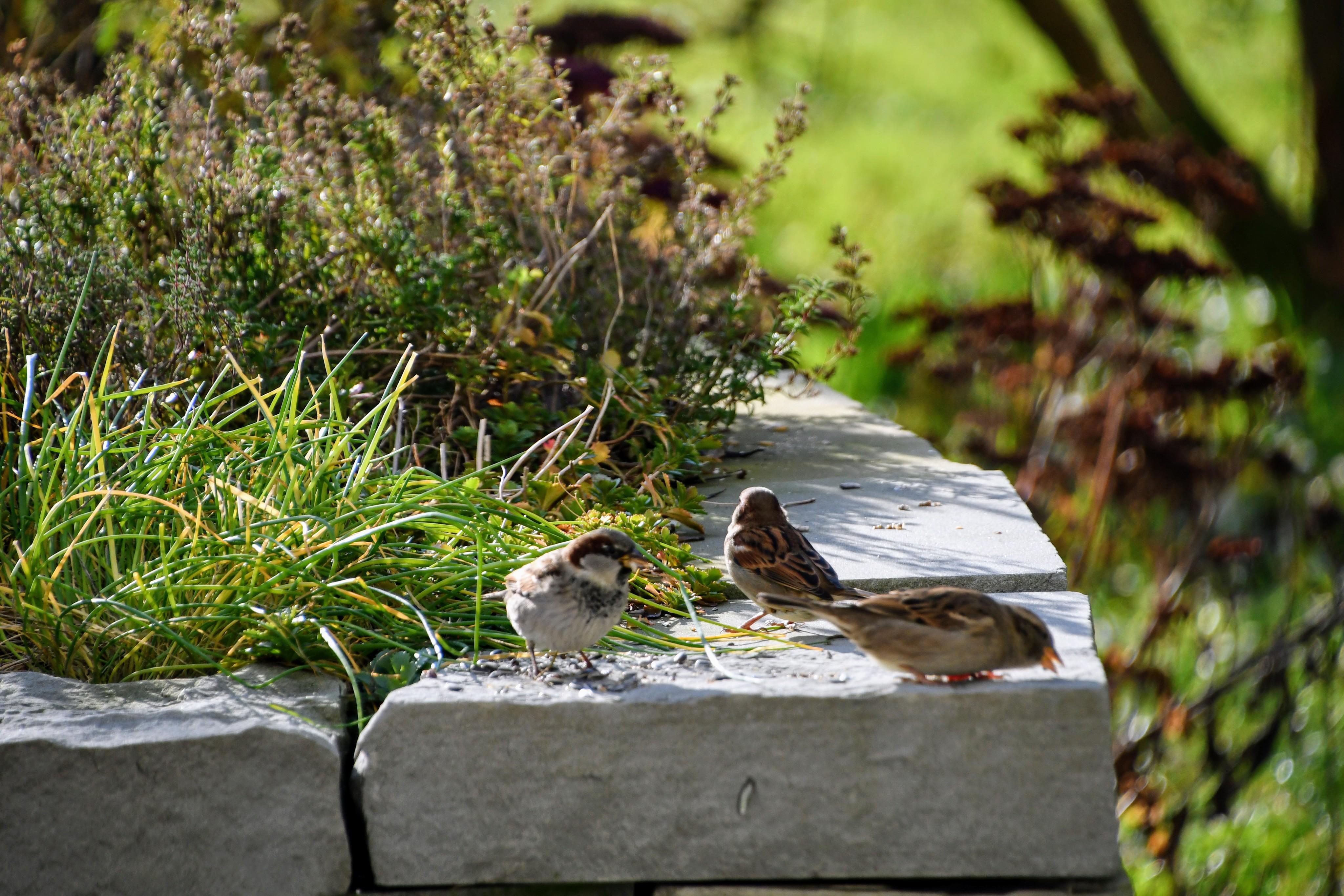 sparrows-03.12-1