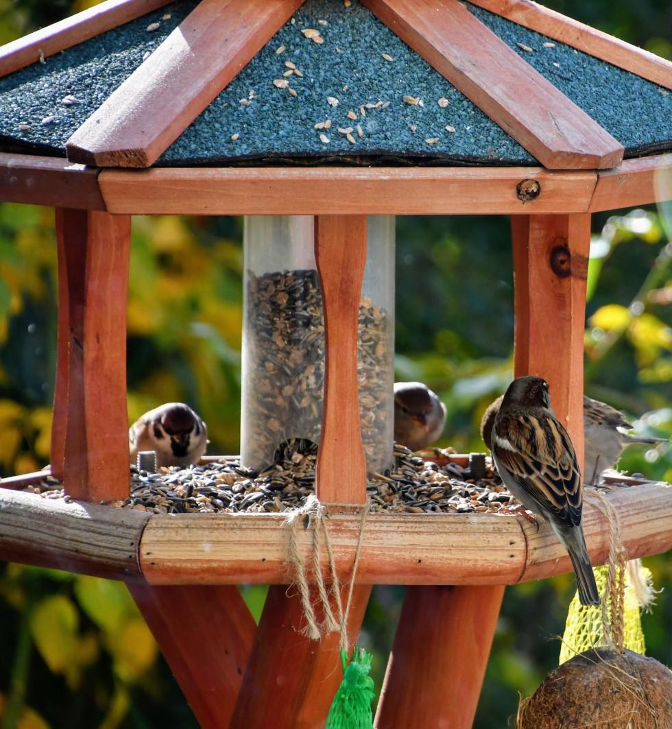 sparrows-03.12-11