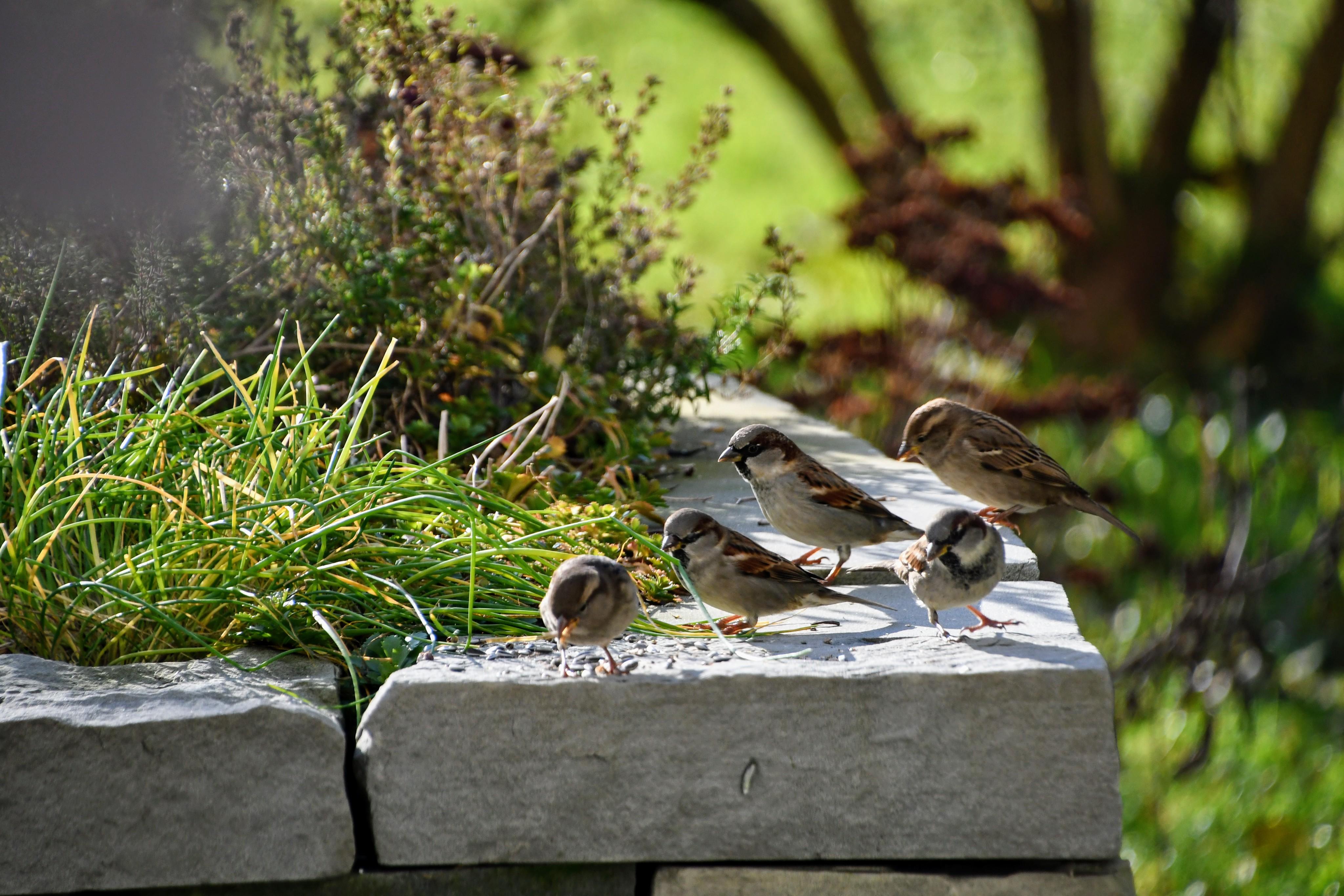 sparrows-03.12-4