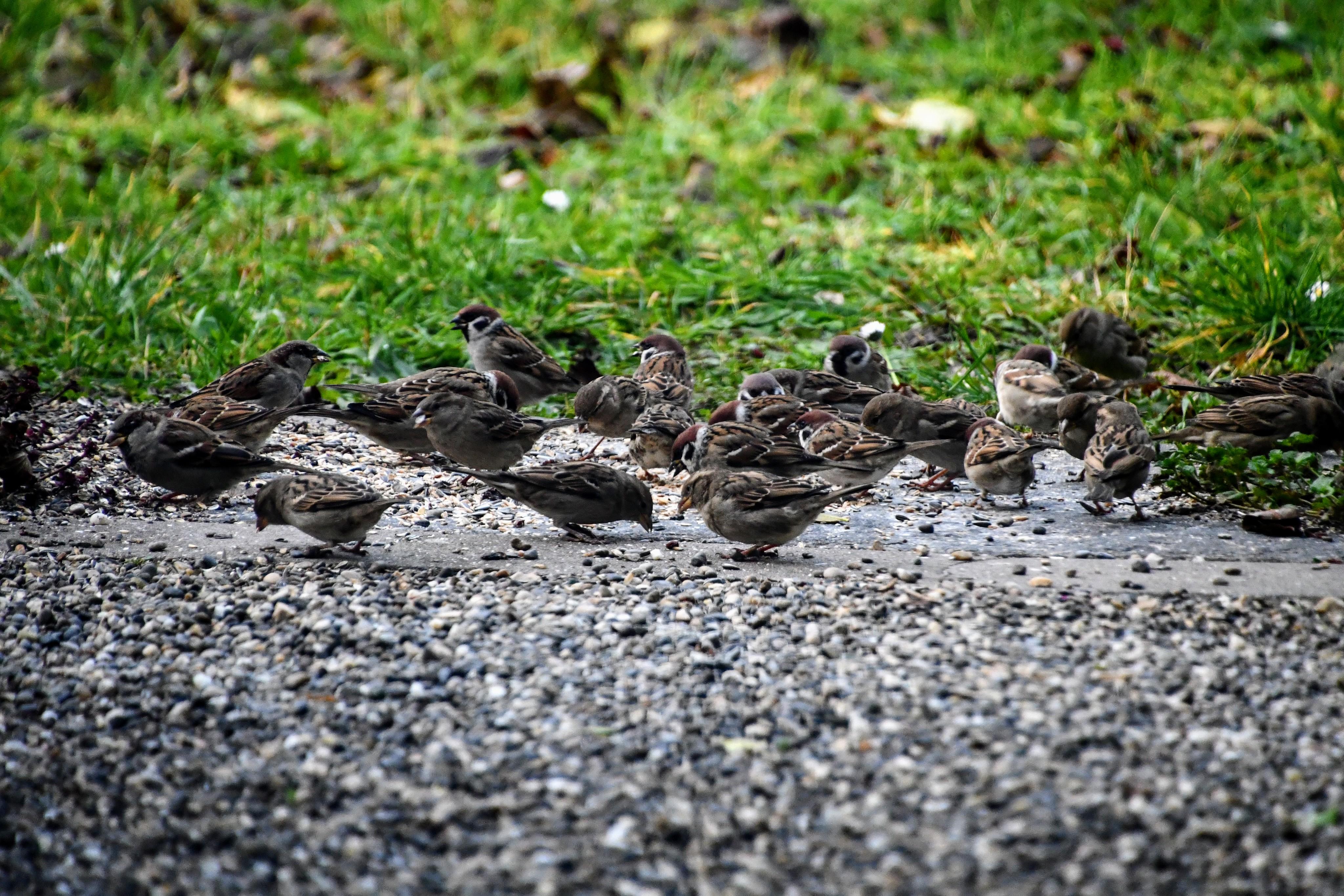 sparrows-08.12-1